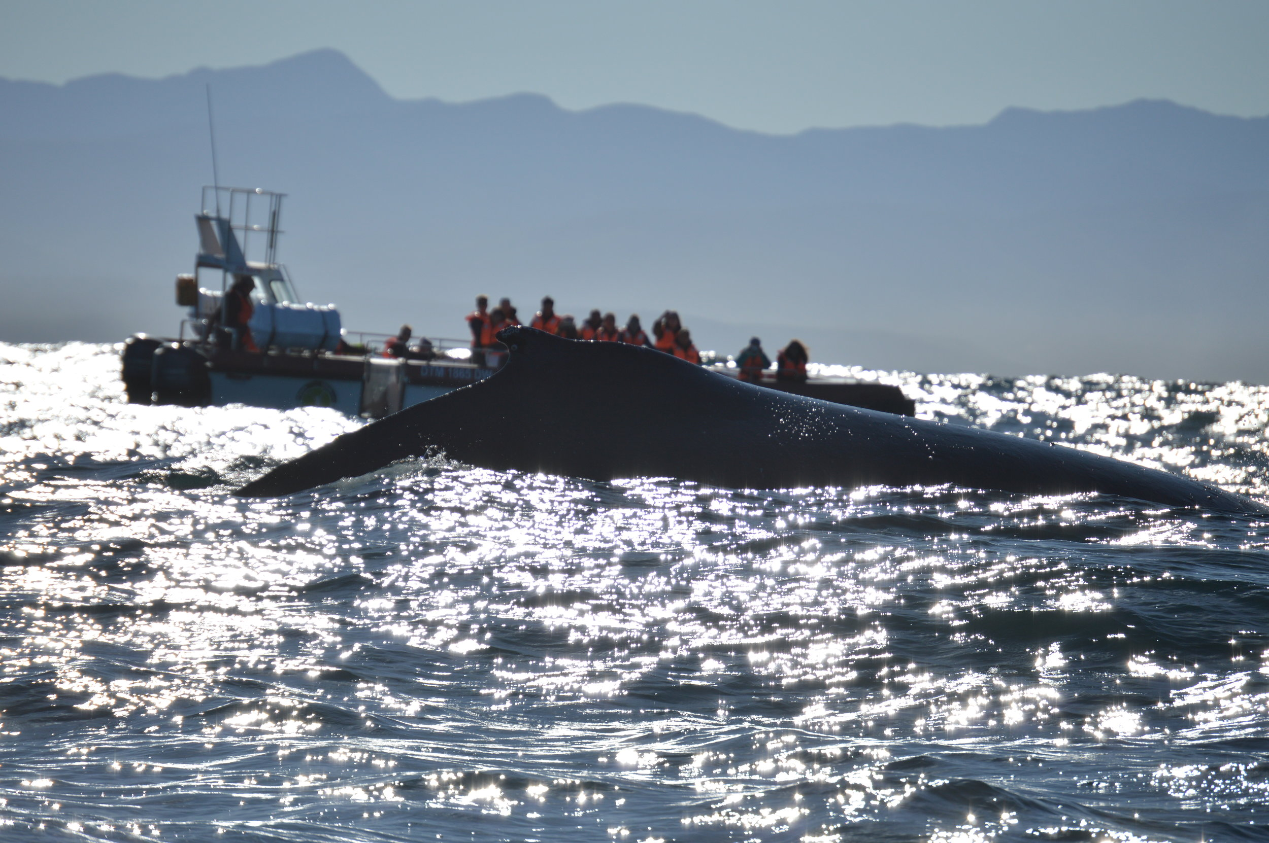 Whale watching in Plettenberg Bay. Photo: Sally Sivewright