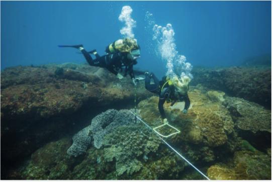 Surveying the local coral reefs. Photo: Jeff Hester - Photographers Without Borders