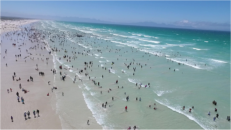 Muizenberg beach, Cape Town on New Year's Day. Photo: @sharkspotters #BeSharkSmart