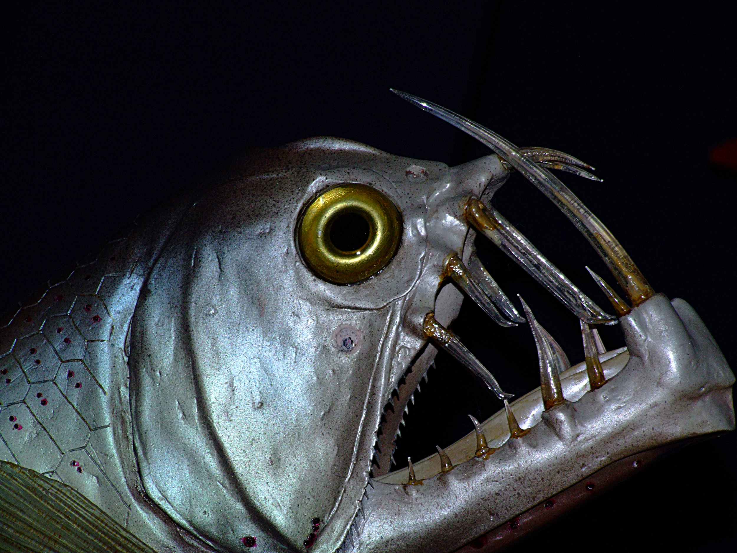 You'll need big eyes, big teeth, and a big mouth to survive in the deep! Photo: FreeImage.com/GavinMills