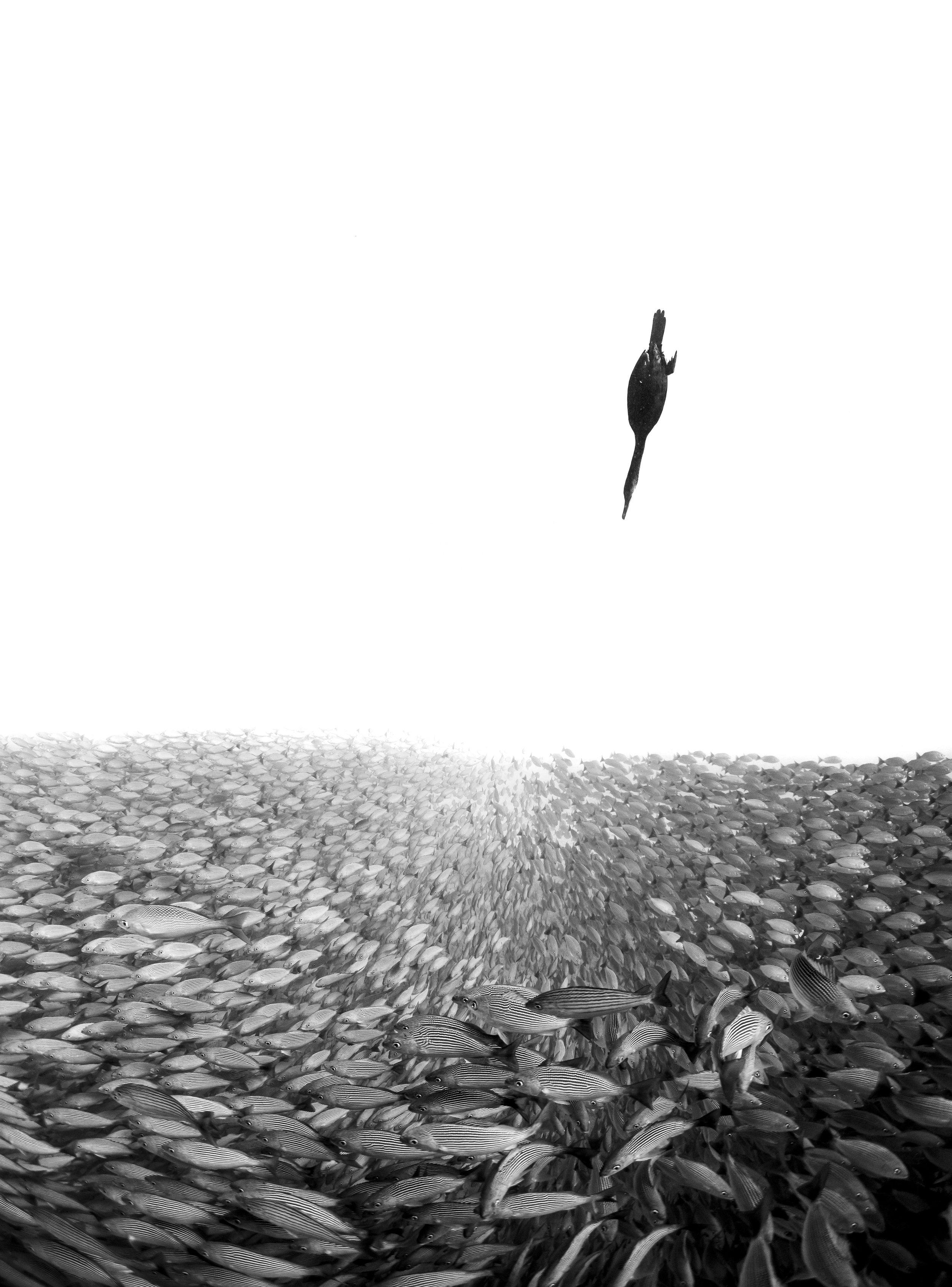 Between Two Worlds ©Henley Spiers/UPY2019