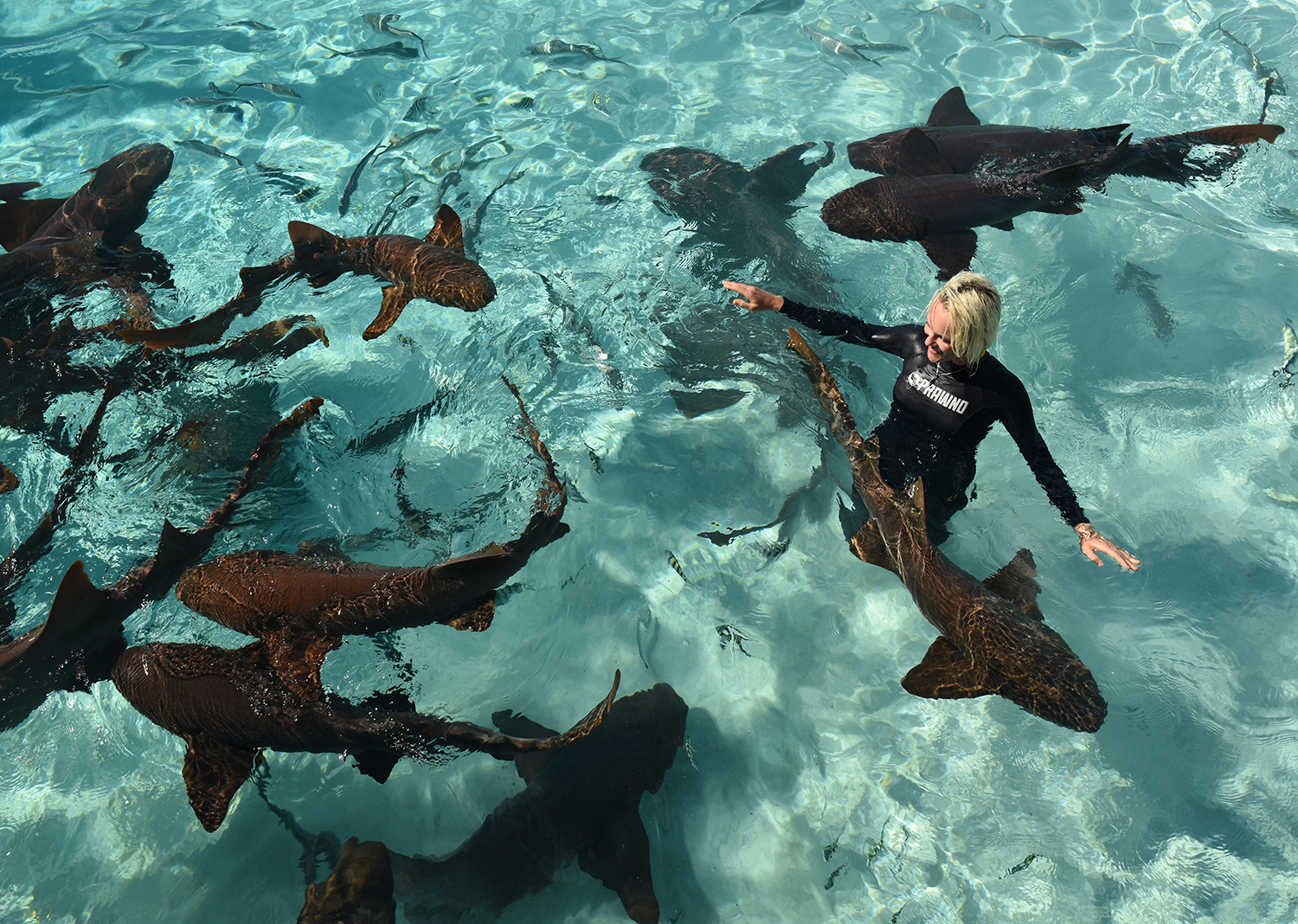 Jillian with nurse sharks. Photo: Duncan Brake