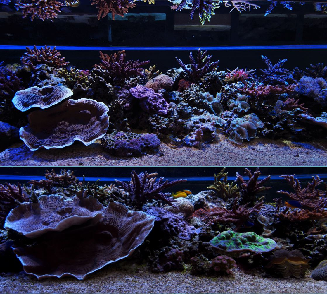 Growing coral in a closed system. Photo: Lewis Cocks