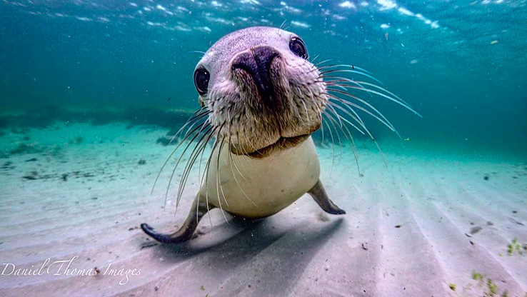 A playful seal. Photo: Daniel Browne