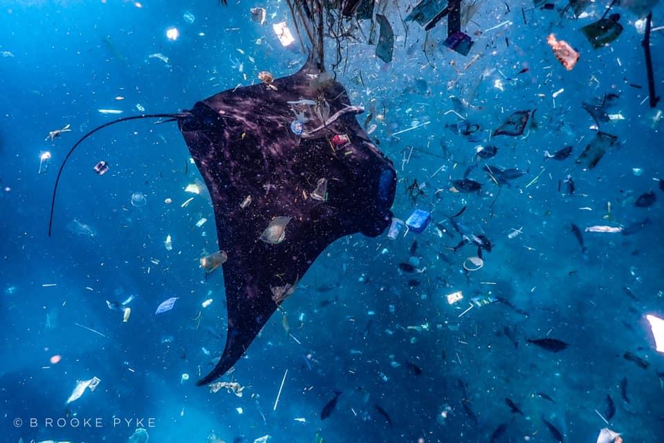 A manta ray navigating through a sea of plastic. Photo: Brooke Pyke @wakeupand.dive