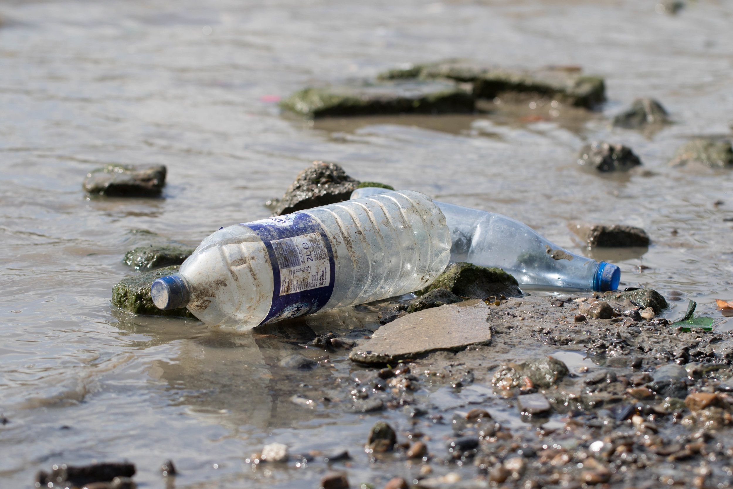 The average Londoner buys 175 plastic bottles of water every year. Photo: ZSL