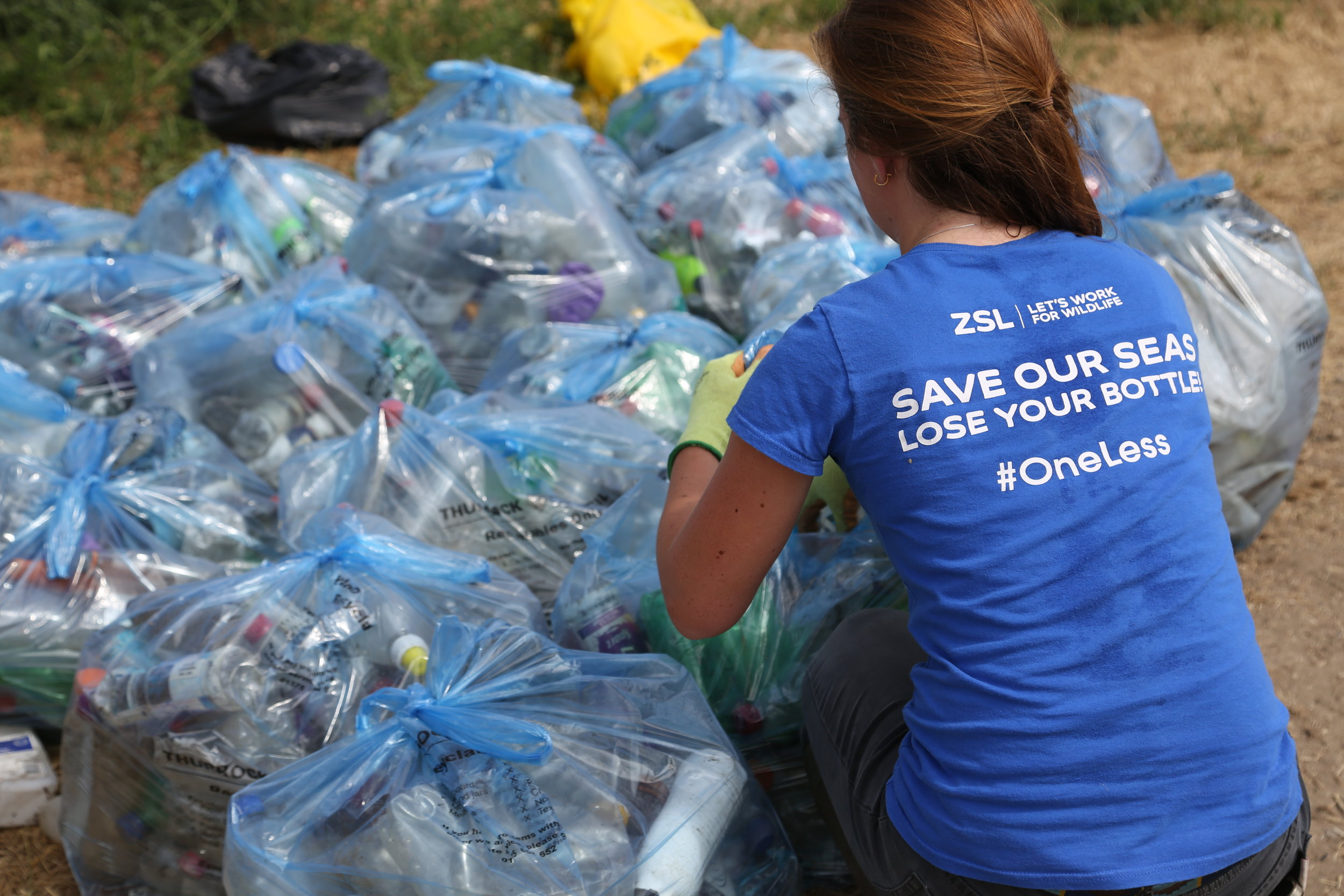 #OneLess and Thames21 have collected over 69,500 plastic bottles along the shores of the Thames. Photo: ZSL - Jonathan Kemeys