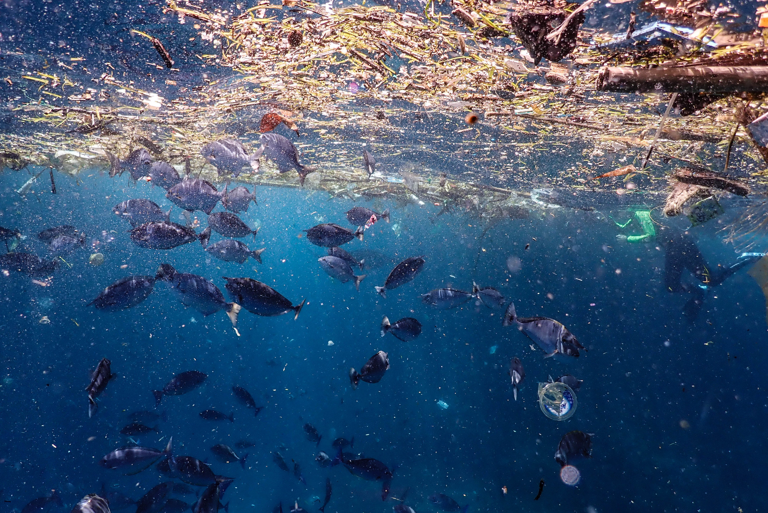 The vast amount of plastic in our oceans opens up opportunities for species to be transported and introduced. Photo: Brooke Pyke