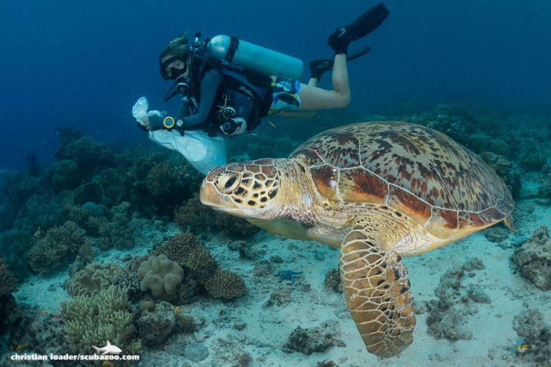 A diver sharing the reef with a sea turtle during a reef clean event. Photo: Christian Loader (Courtesy of SJ SEAS)