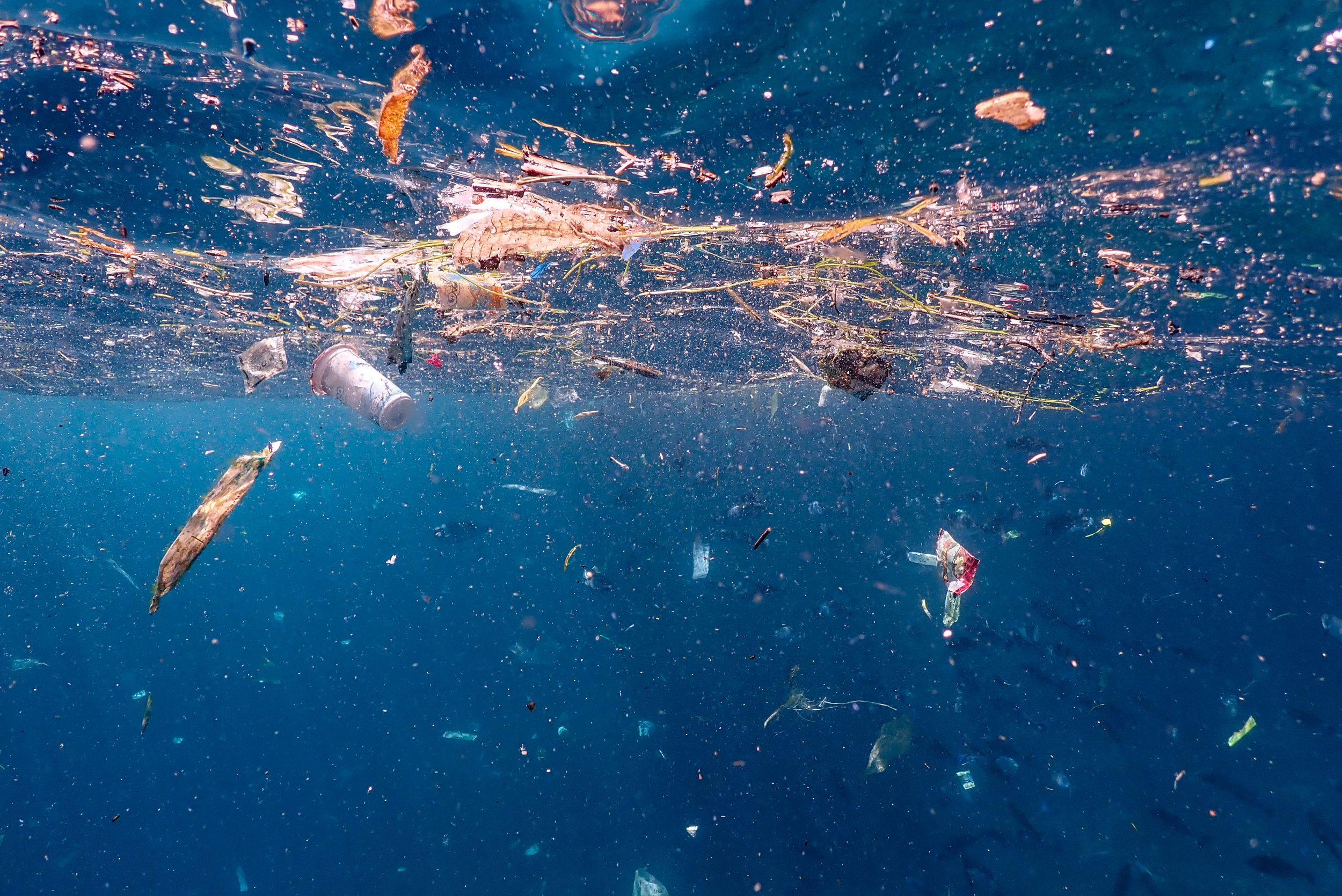 Plastic floating in the ocean can absorb chemicals and pollutants from the surrounding water. Photo: Brooke Pyke