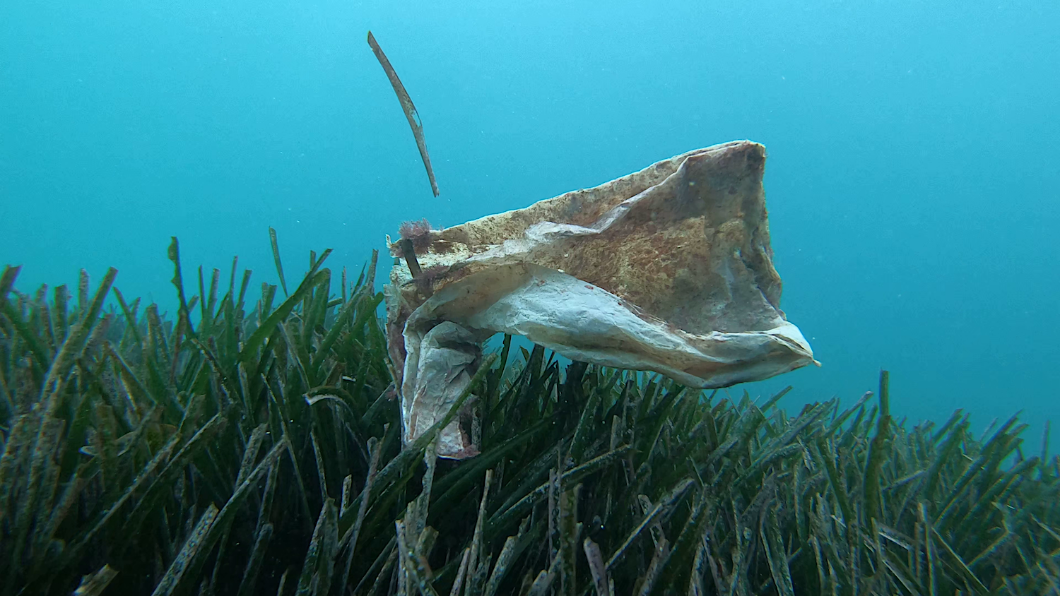 'Biodegradable' plastic bags can last for years in the ocean. Photo: Enrique Talledo