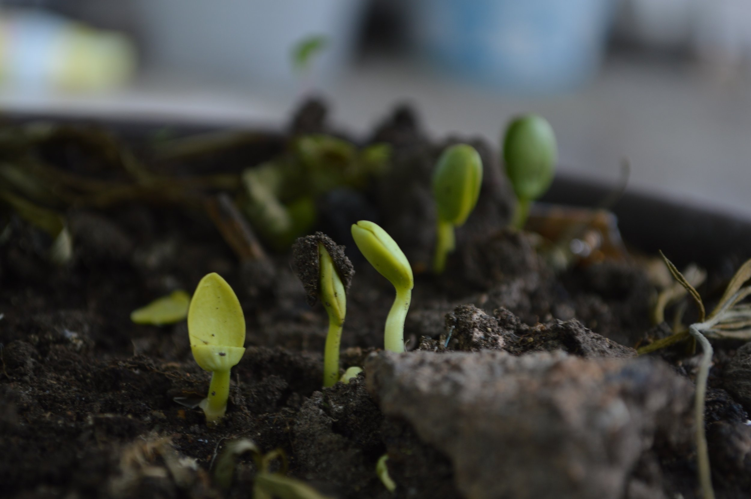 The degradation products from compostable products must be able to support plant growth. Photo: Pixabay