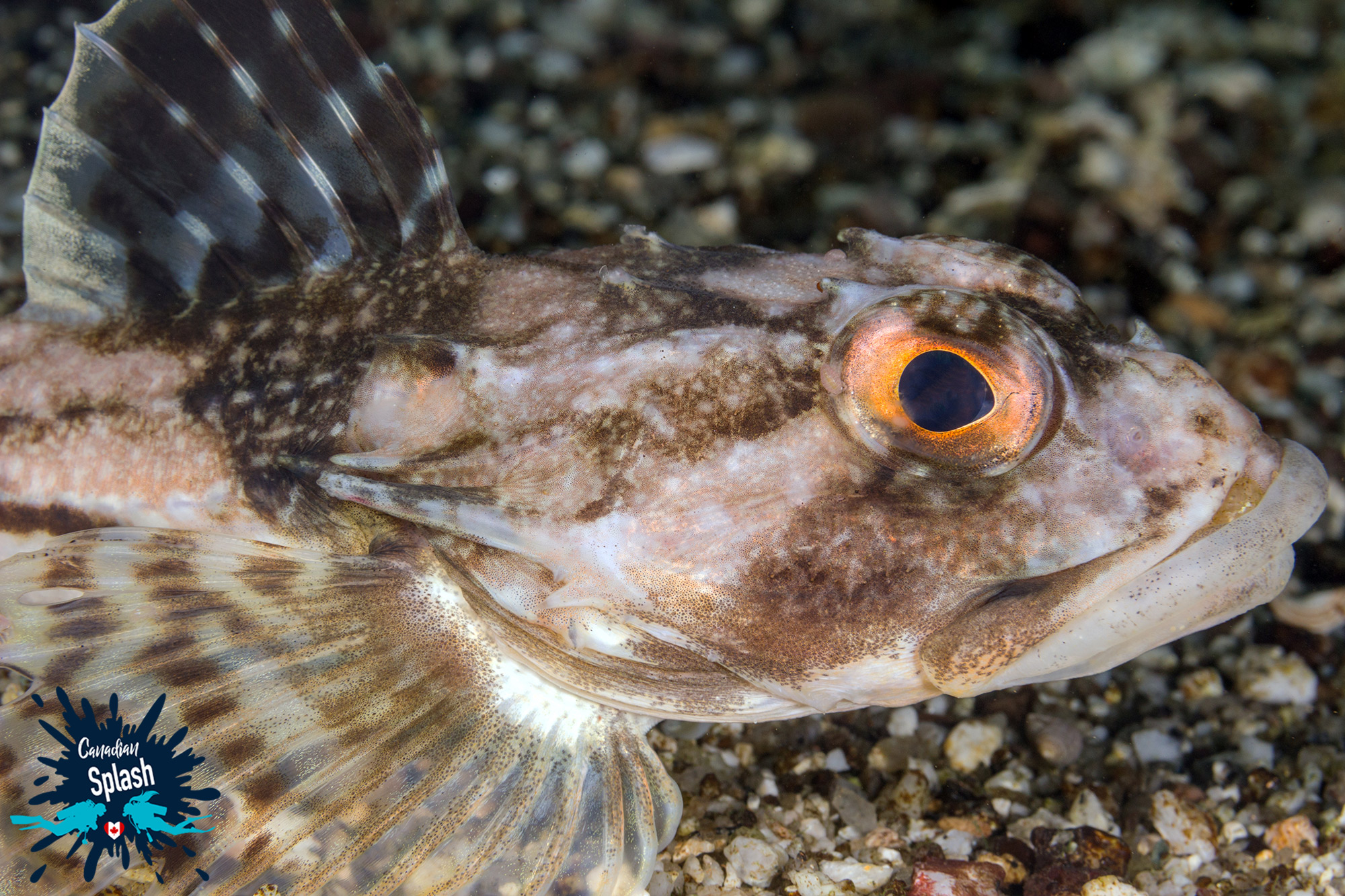 Fish life beautifully camouflaged in a shingle reef. Photo: Canadian Splash