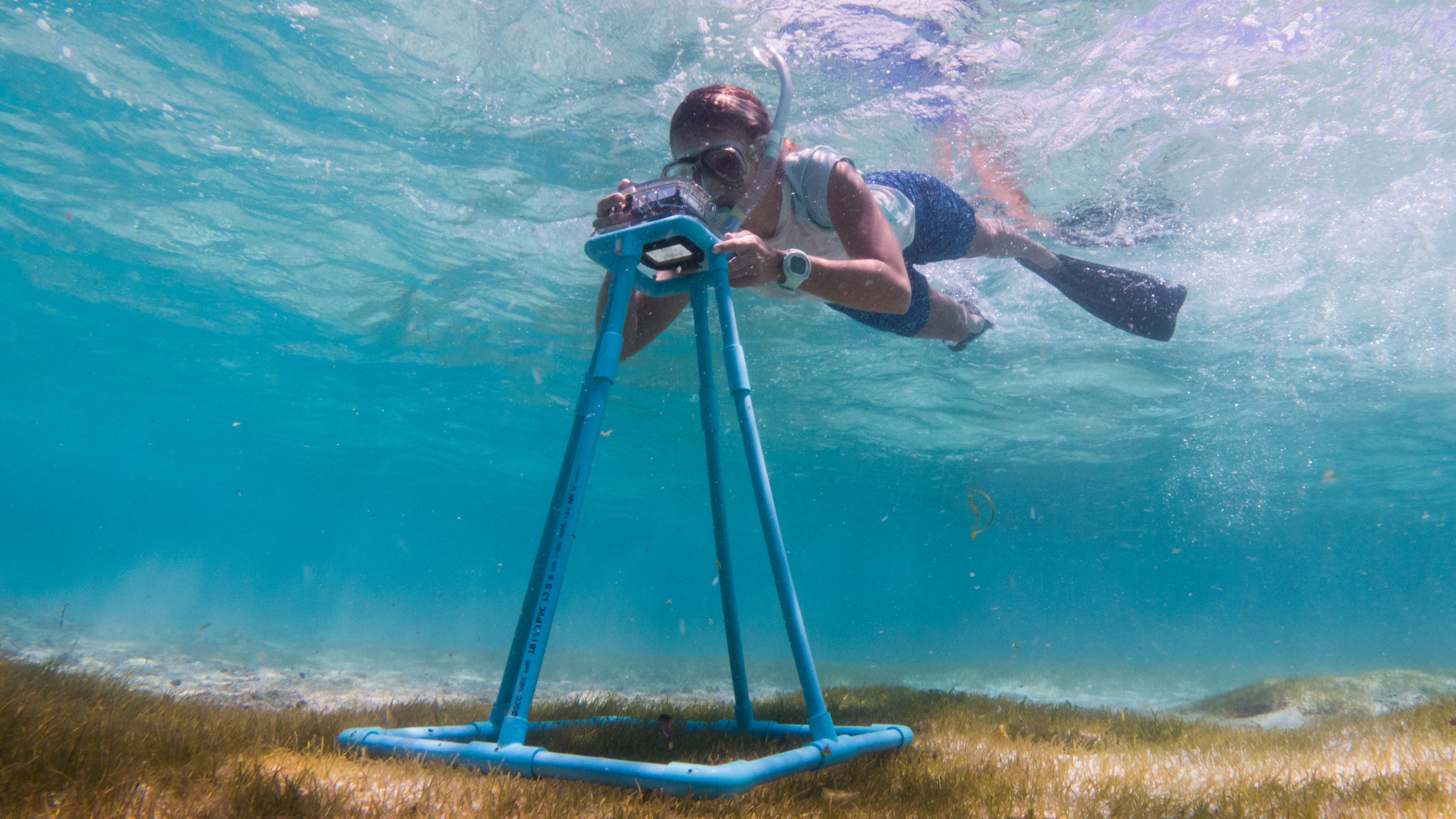 Tash's work combines research, communications and outreach. Here she's doing a survey on the seagrass meadows as part of #ProtectMaldivesSeagrass campaign. Photo: Andrew Ball
