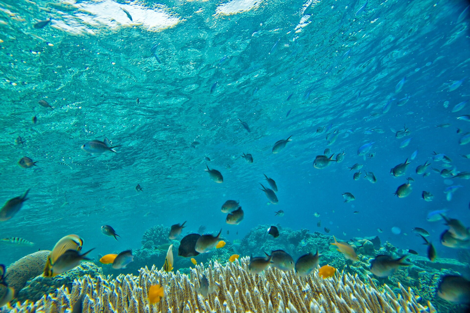 Tristin's dad stuffed a banana in her pocket on one of her first dives, which caused a 'rainbow coalition' of fish to swarm around her! Photo: Pixabay