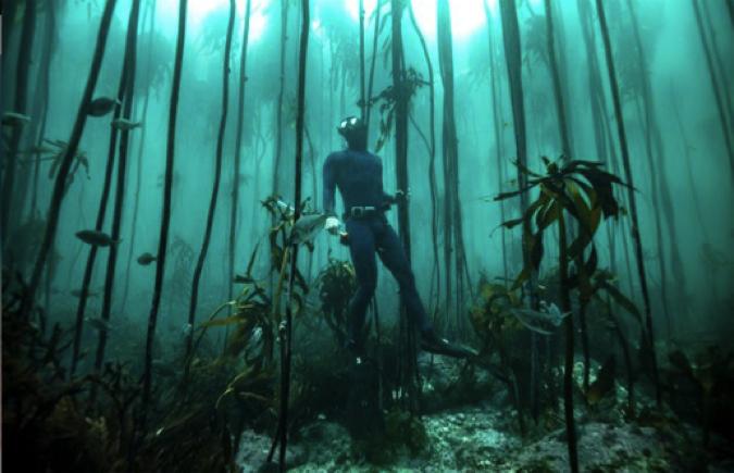 Exploring beautiful and important kelp forest habitats. Photo: Cape RADD