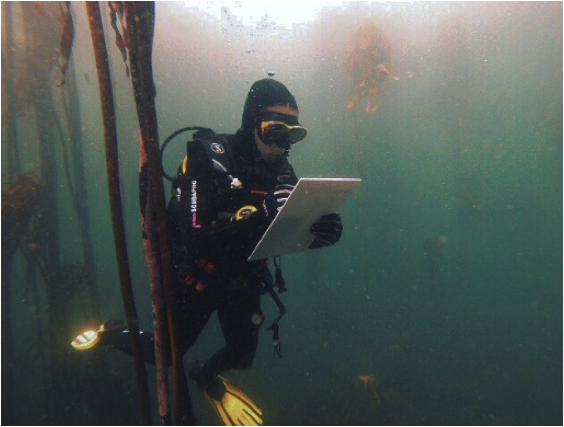 Conducting fish surveys on the distribution rates and density of kelp forest. Photo: Cape RADD