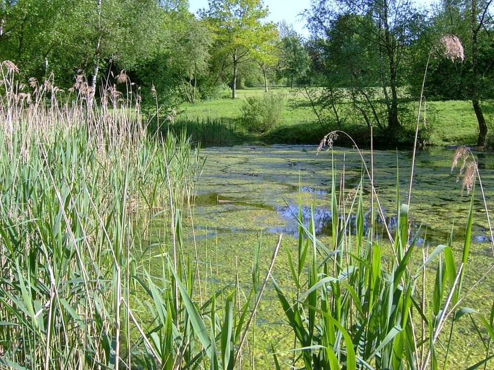 18 naturschutzgebiet-001.jpg