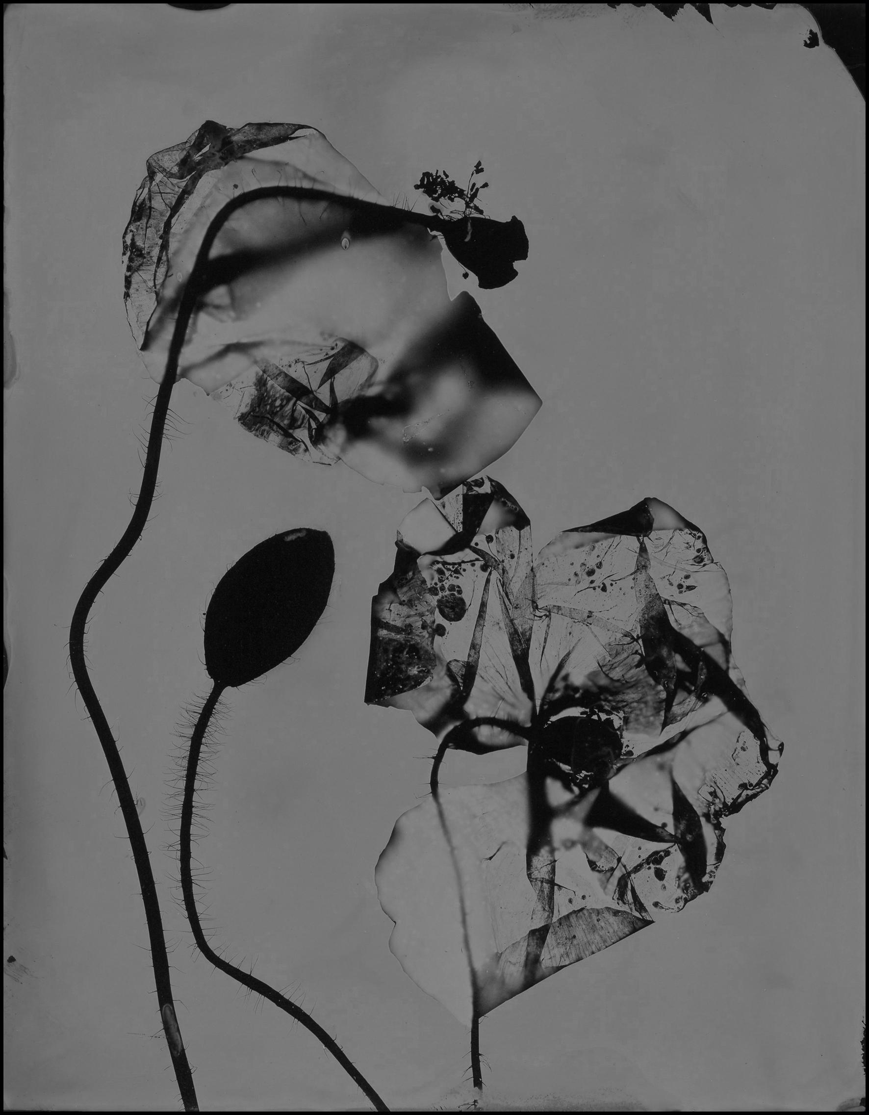 poppy015.jpg