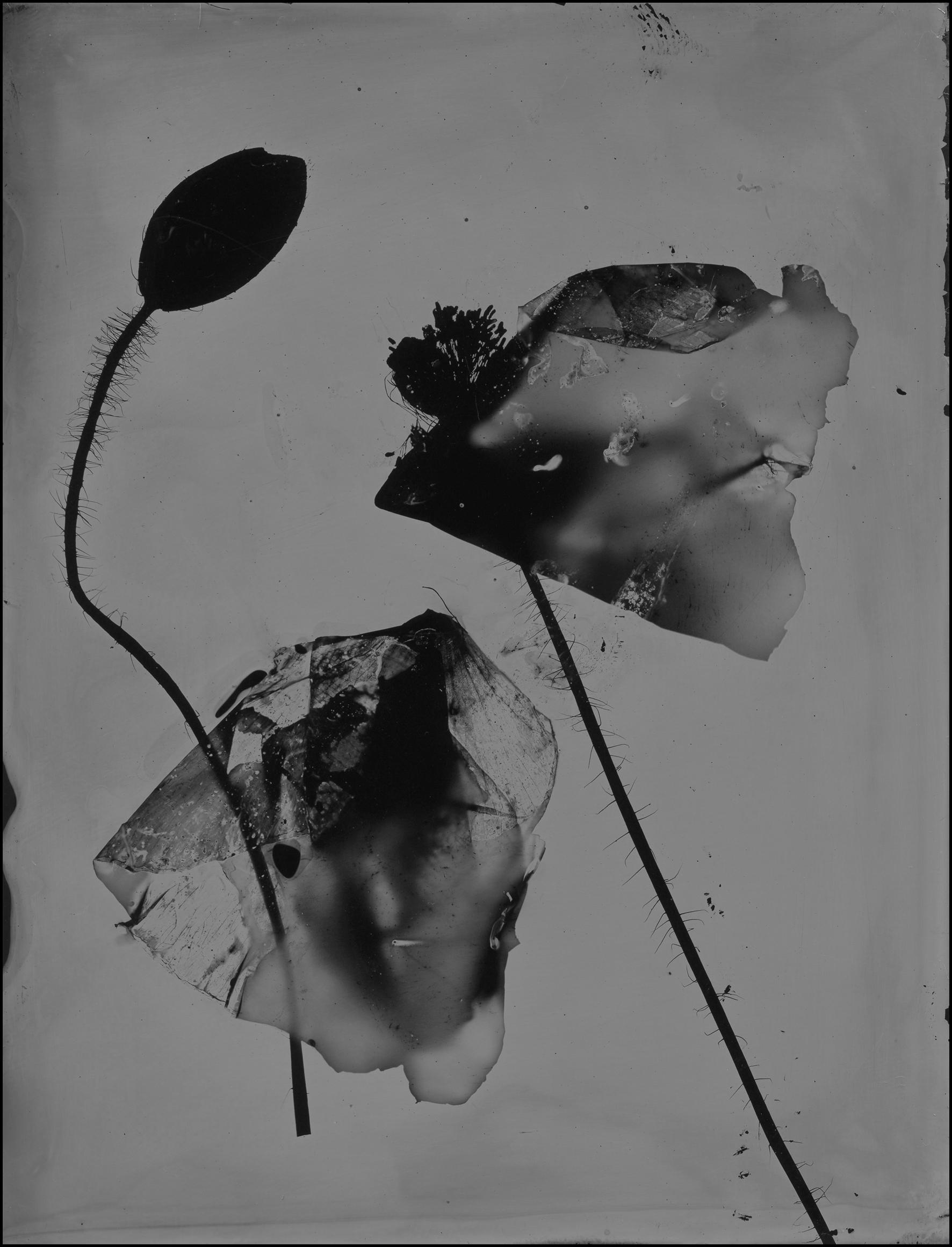 poppy019.jpg