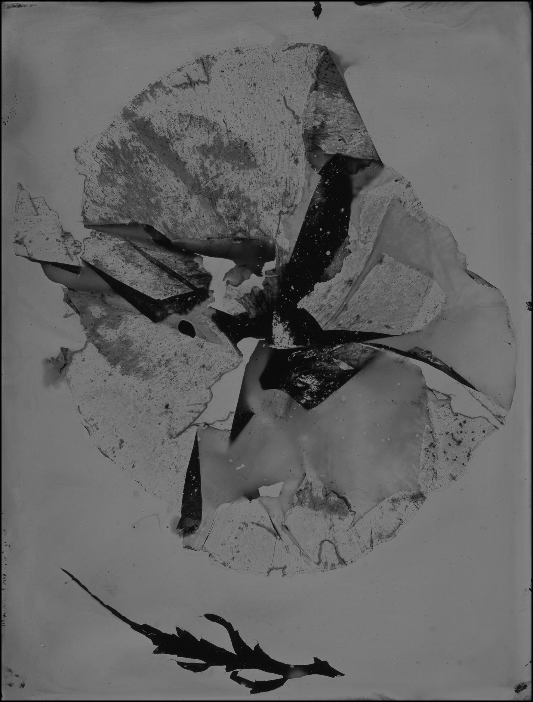 poppy025.jpg