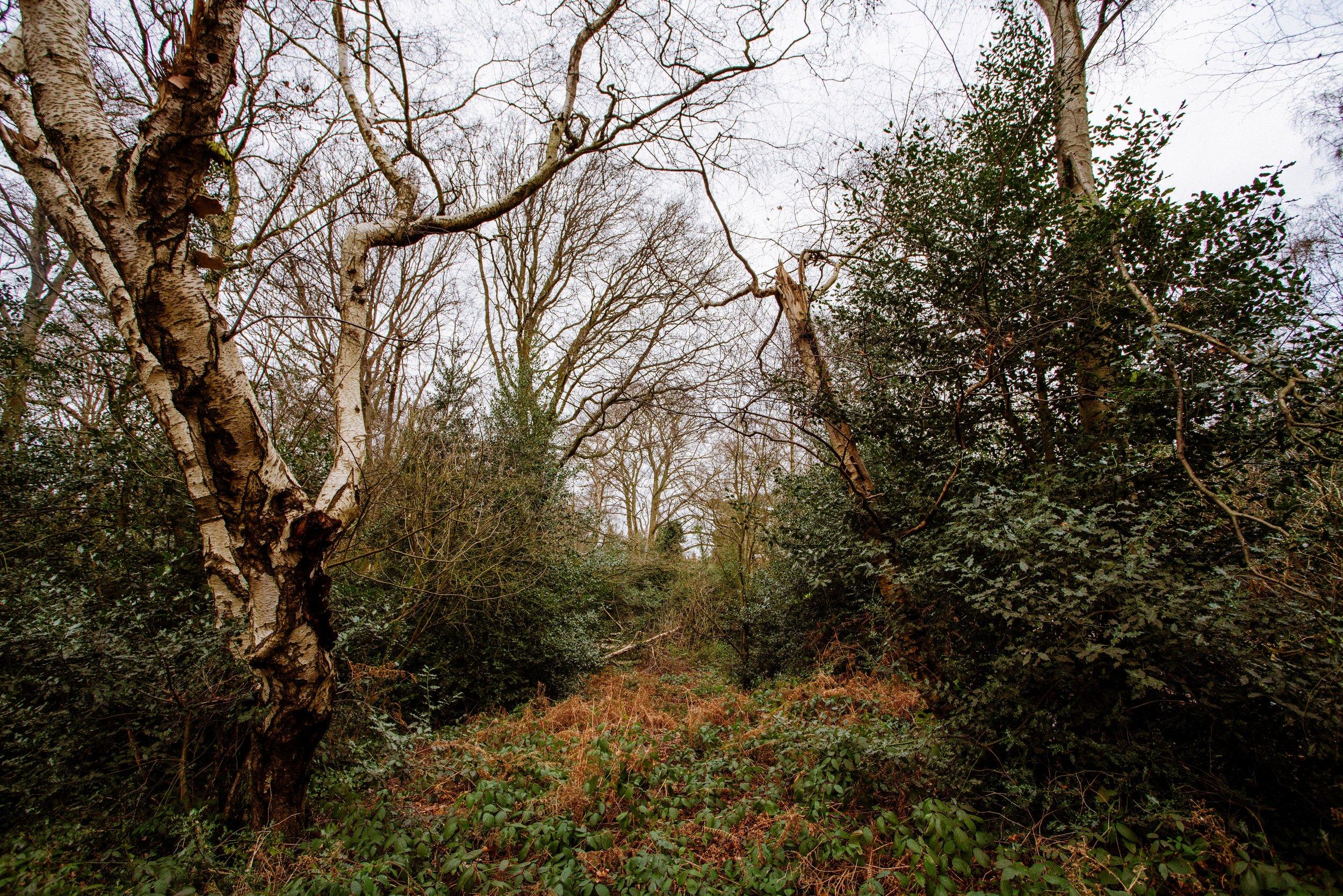 NN-Rebecca-Lennox-Hampstead-Pergola-858.jpg