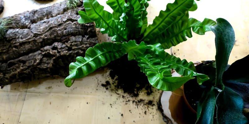 plant mom mounting workshop.jpeg