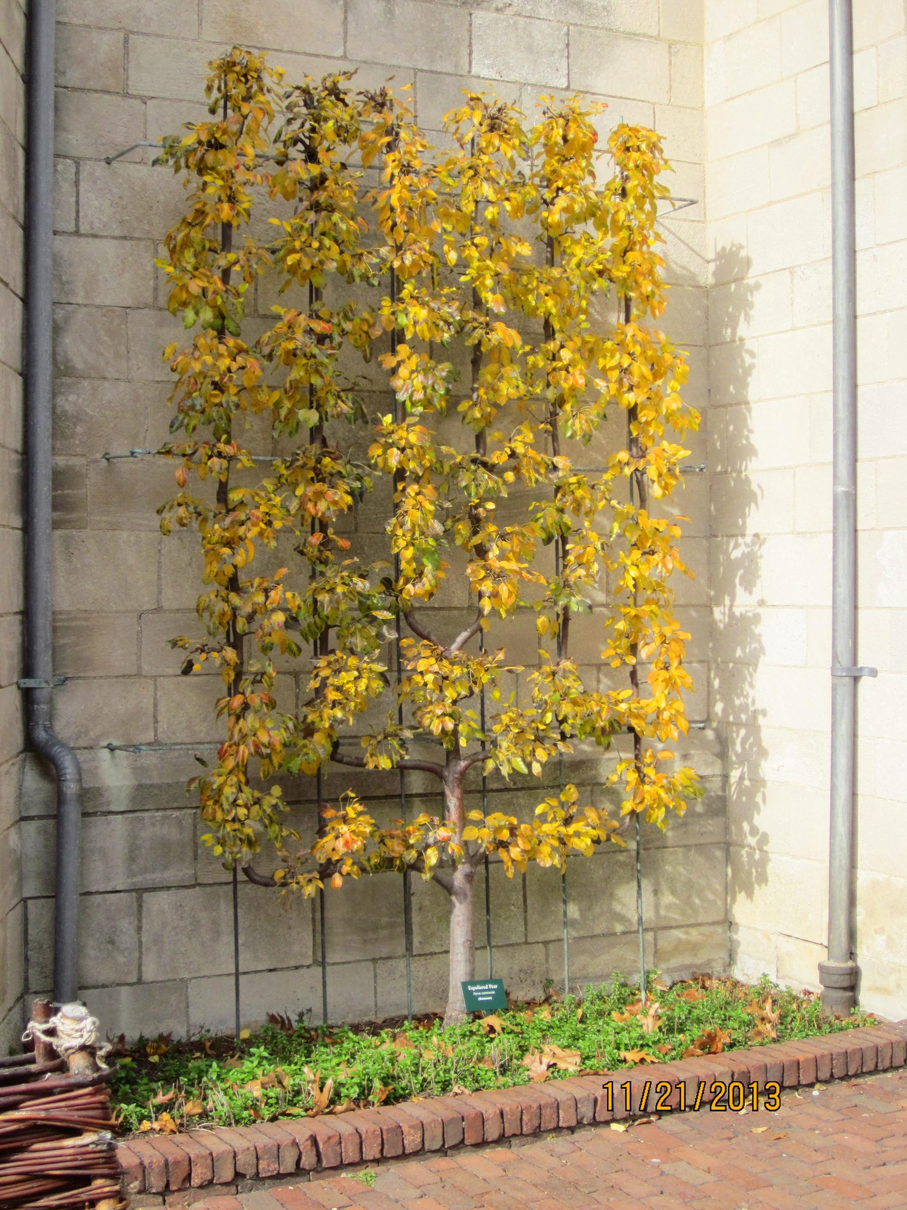 Dryad Shrub And Tree Diagnostics_Cloisters.jpg