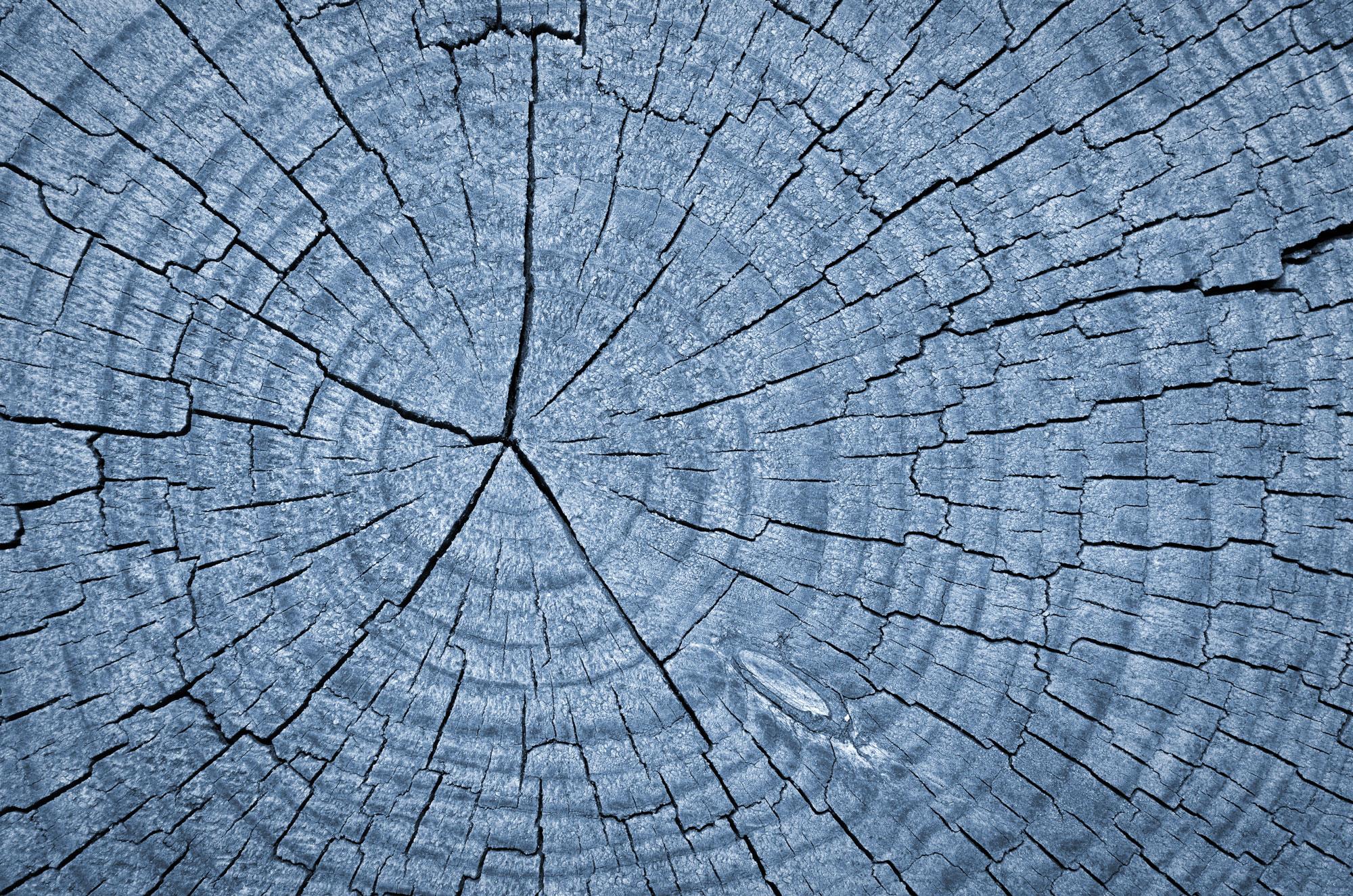 WoodRings.jpg