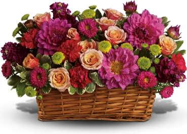 Burst of Beauty Basket    Hot pink flowers - dahlias, matsumoto asters and carnations - are arranged with pale orange roses, purple stock and bright green button mums in a natural rectangular basket.    Buy Now>>