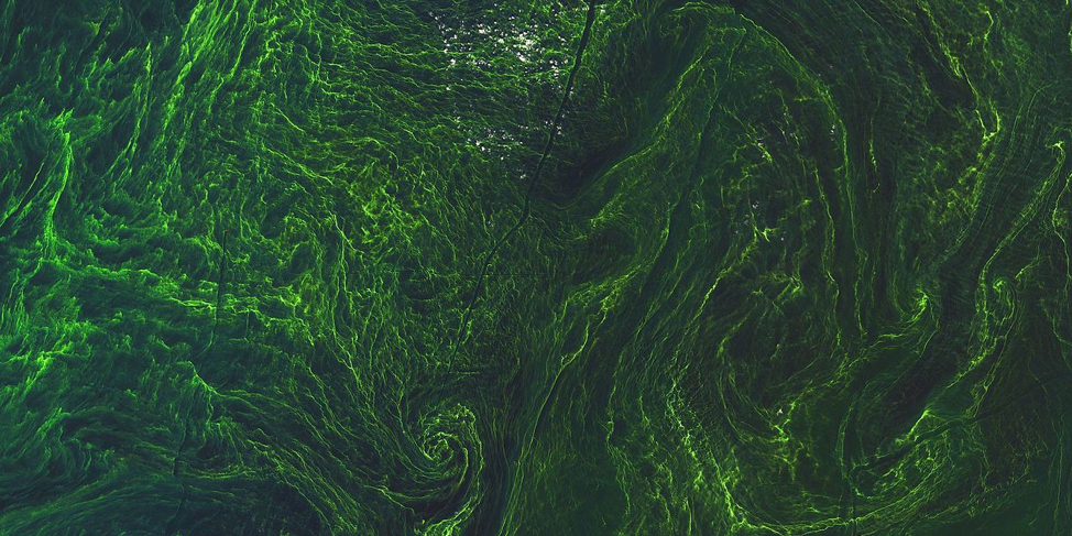 Algae can be produced on the large scale very cheaply, and can provide us with most of the products and services we could possibly need. Photo credit: Space10