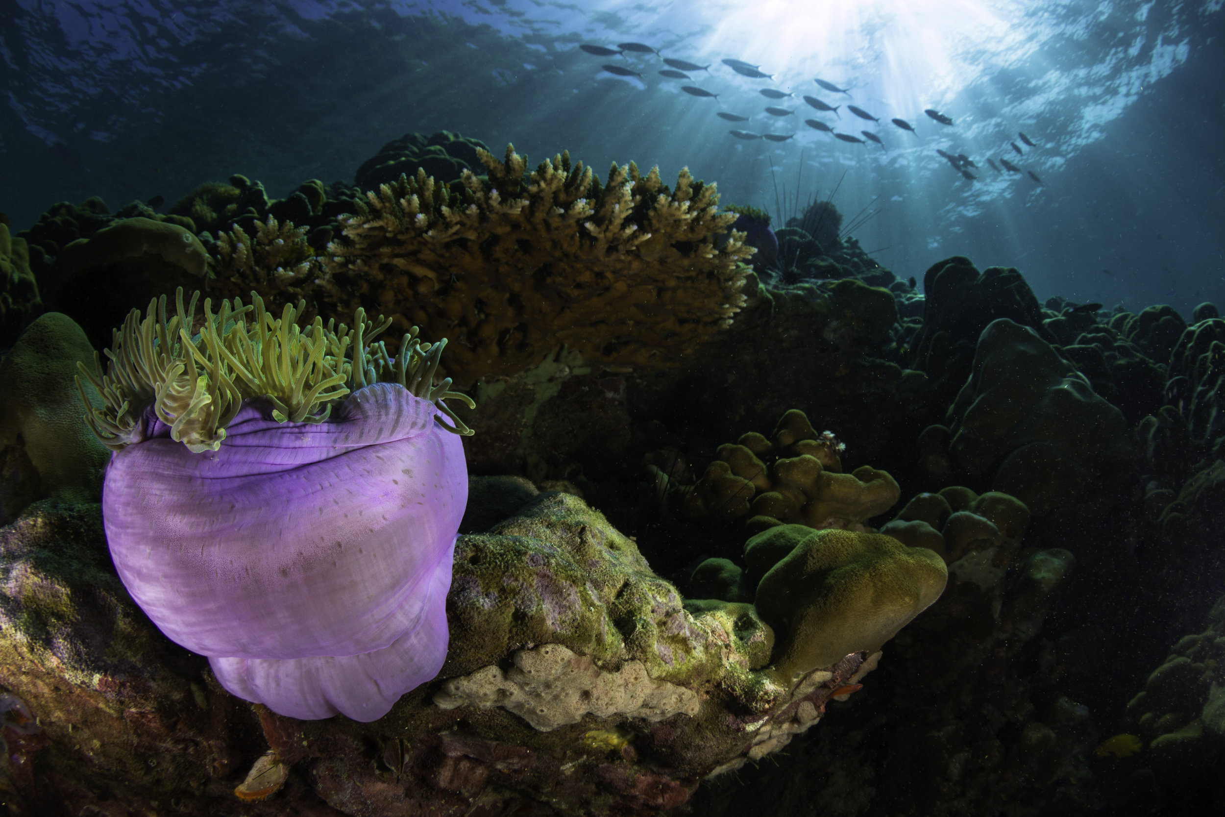 Ocean science -