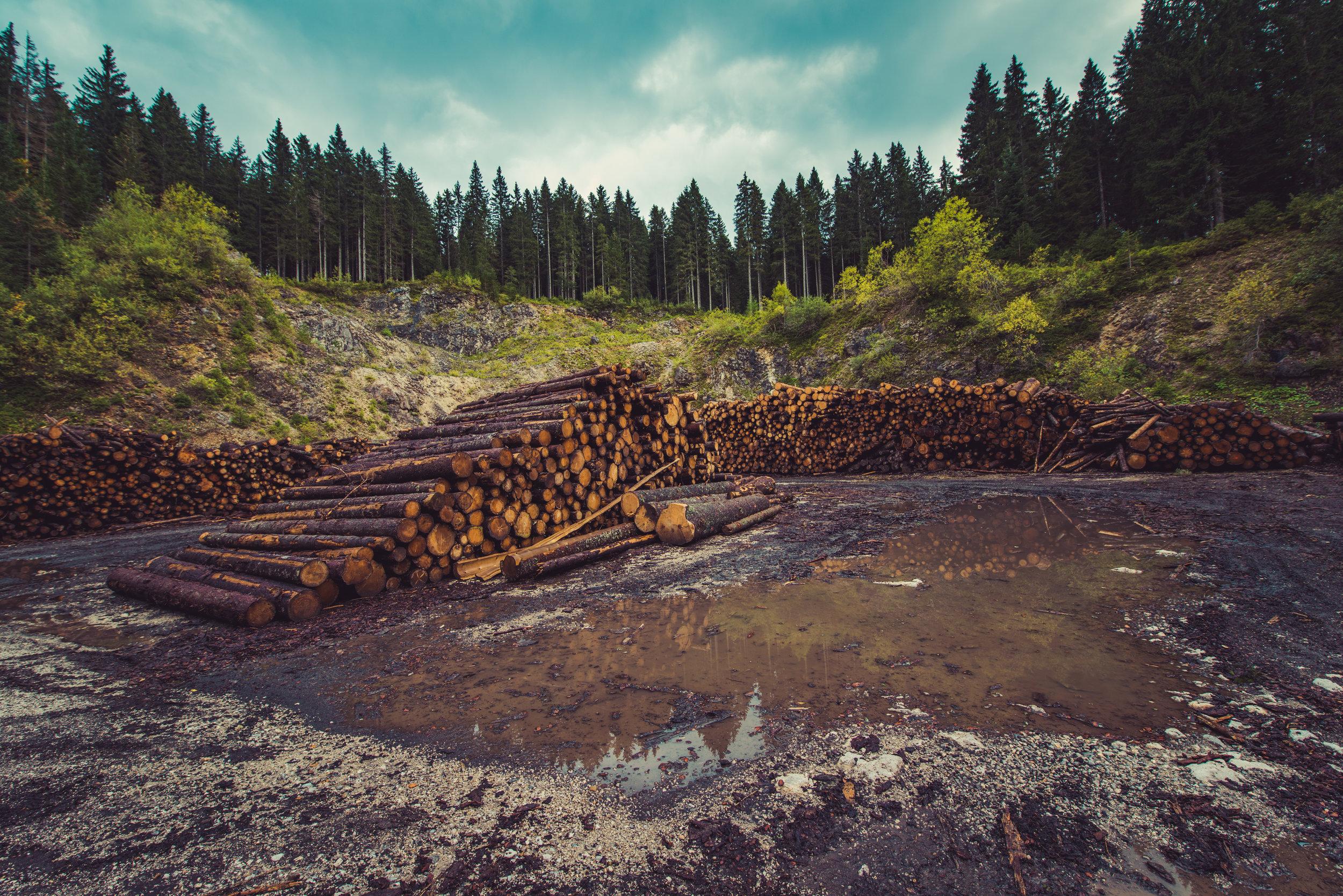 Destruction of our forests removes a critical carbon dioxide  sink  (plants eat carbon dioxide), exacerbating climate change. Photo credit: Ales Krivec