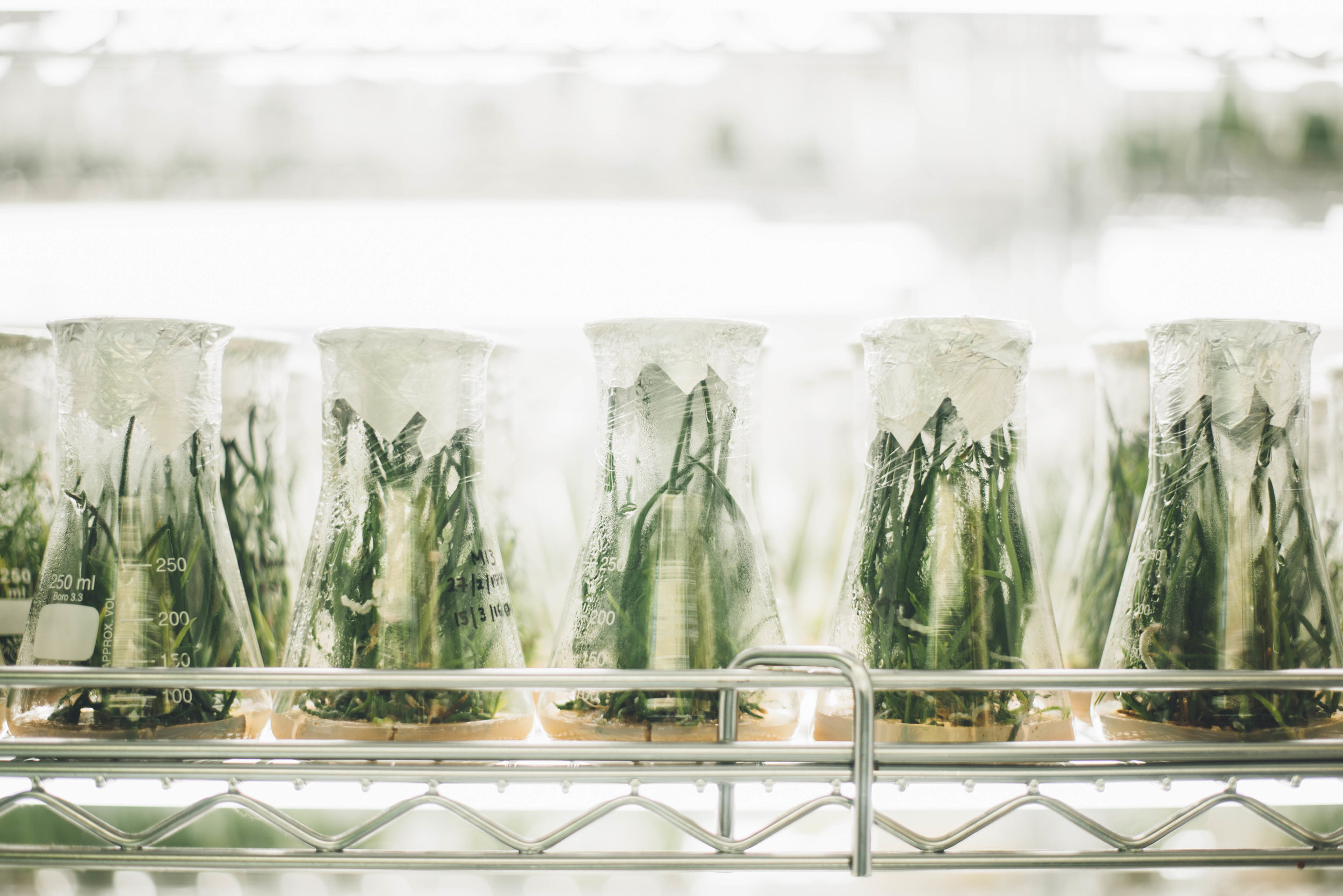 We can optimize the growth of algae in the lab, allowing us to maximize the amount of compounds we can harvest from them. Photo credit: Chuttersnap