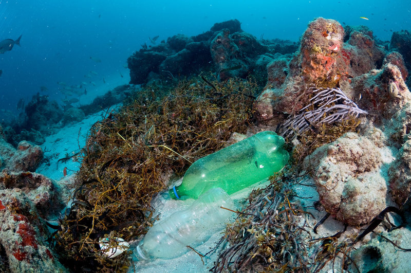 Plastic pollution poses a large threat to coral reefs and the organisms that live within in them. Photo credit: Michael O'Neill