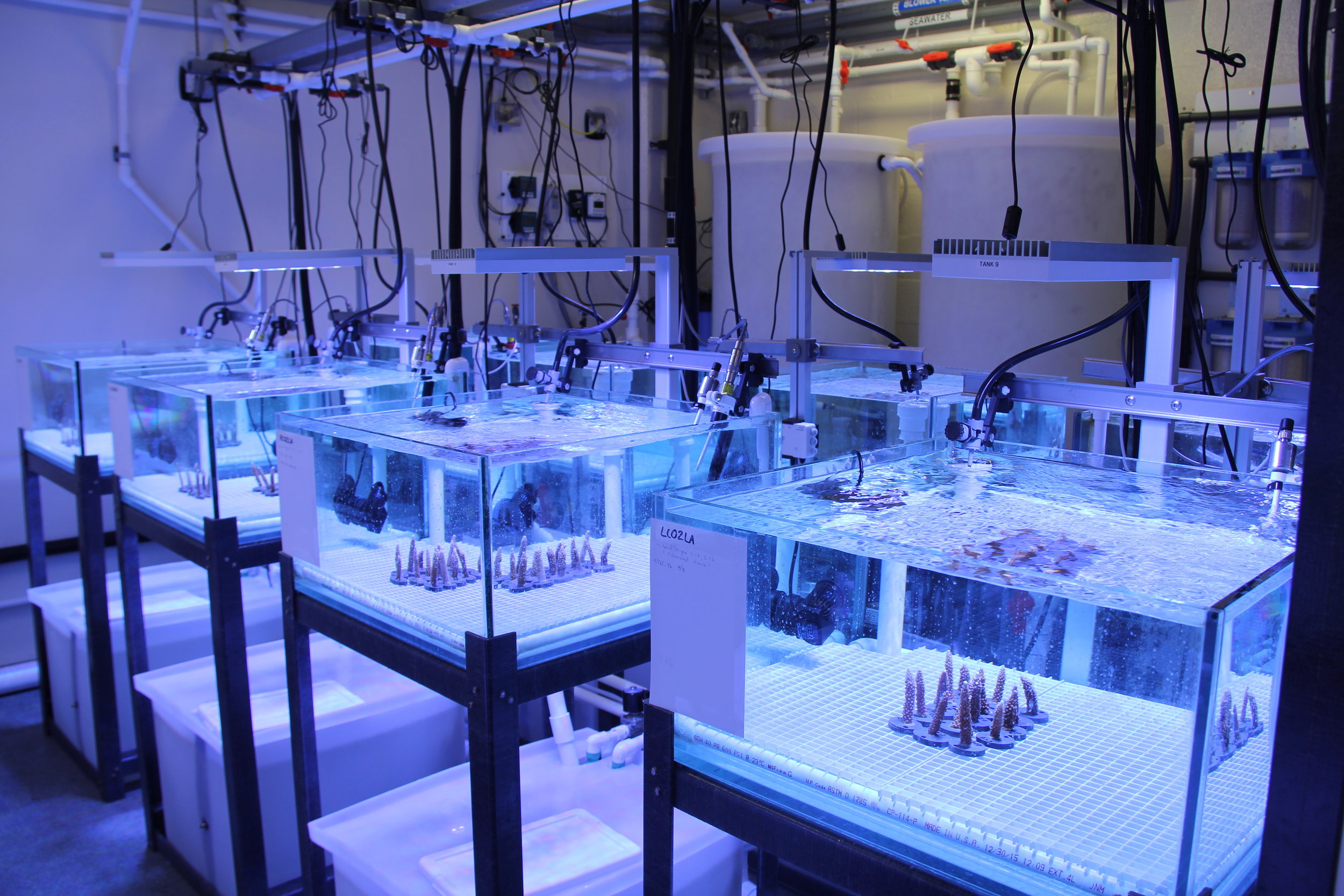 In this lab, corals are subjected to stressors to make them more resilient. Photo credit: NOAA