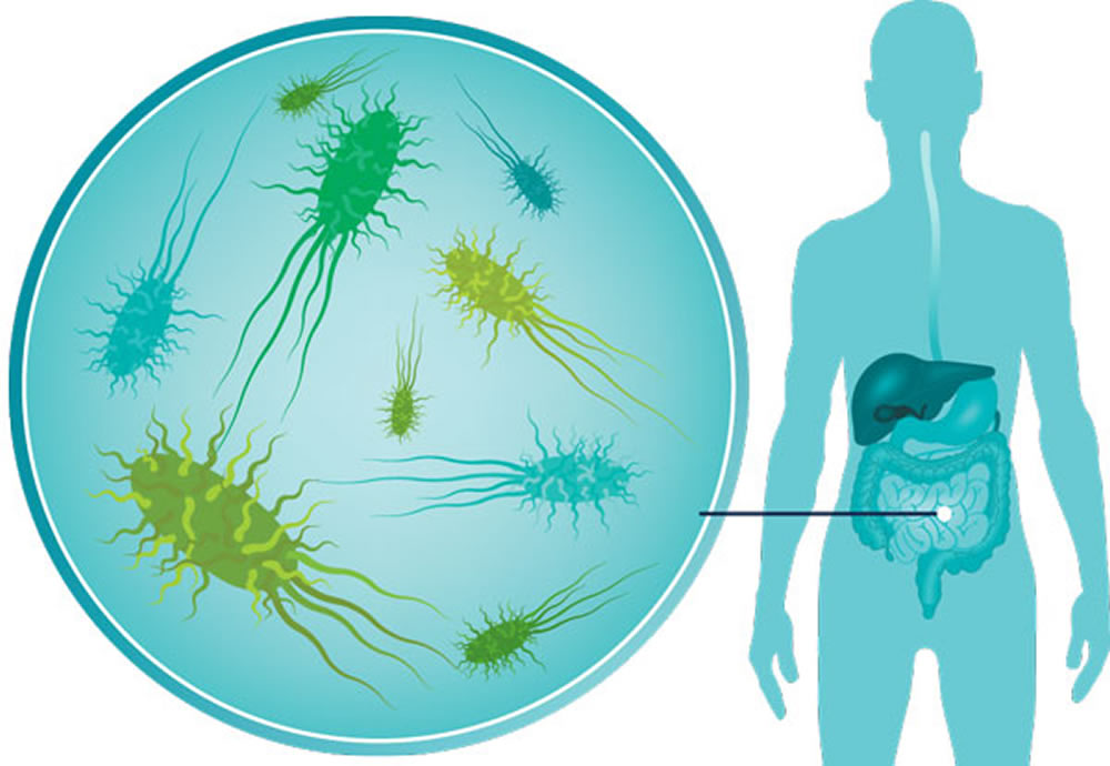 The communities of bacteria in your gut stay pretty much the same over time, and probiotics may disrupt their recovery after a disturbance. Credit: Health Jade