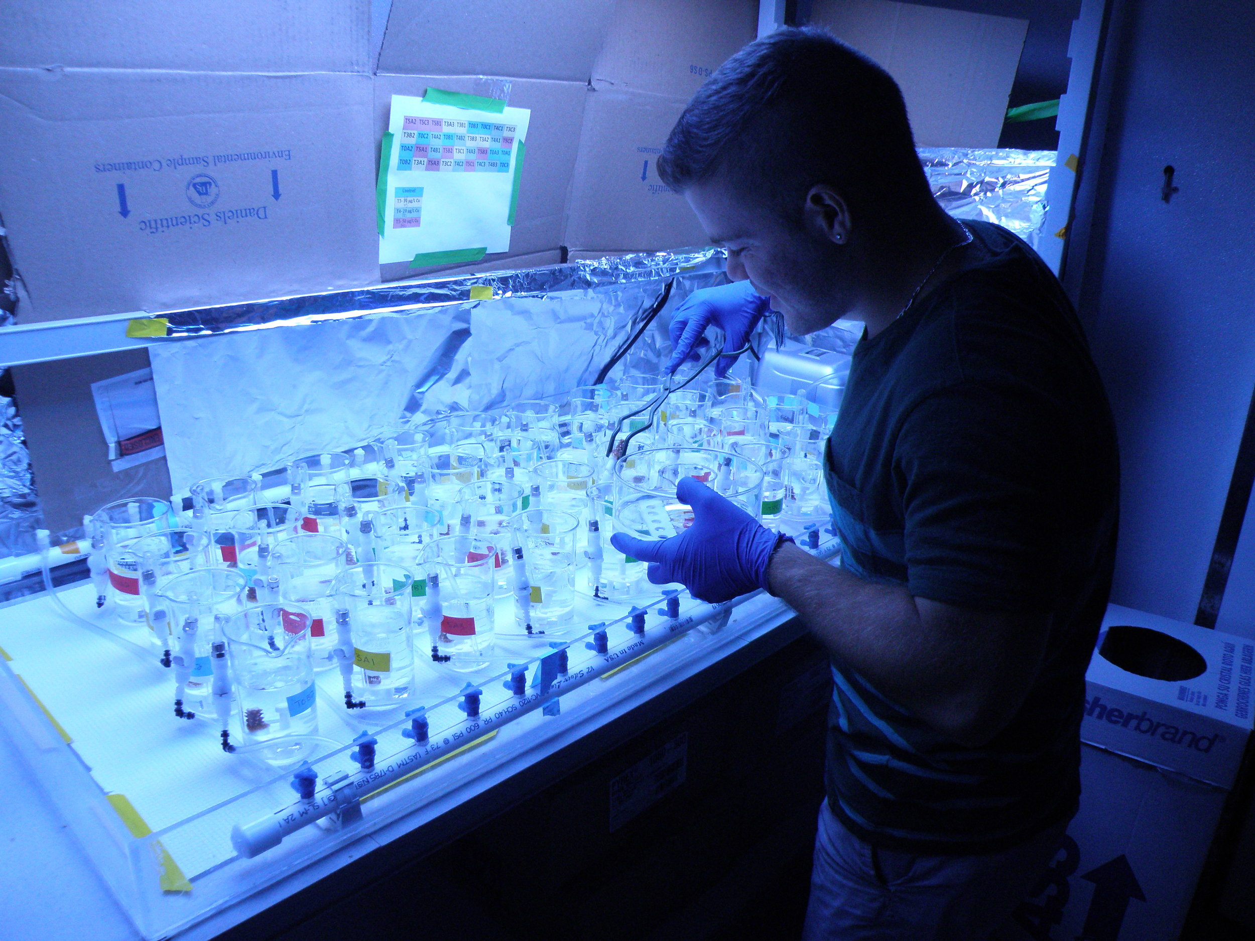 Photo of the author, Jason Baer, performing an exposure experiment on coral fragments at the NOAA Hollings Laboratory in Charleston, SC (2016).
