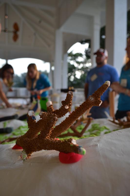 Hands-on reef restoration training workshop. Photo courtesy of Coral Restoration Consortium.