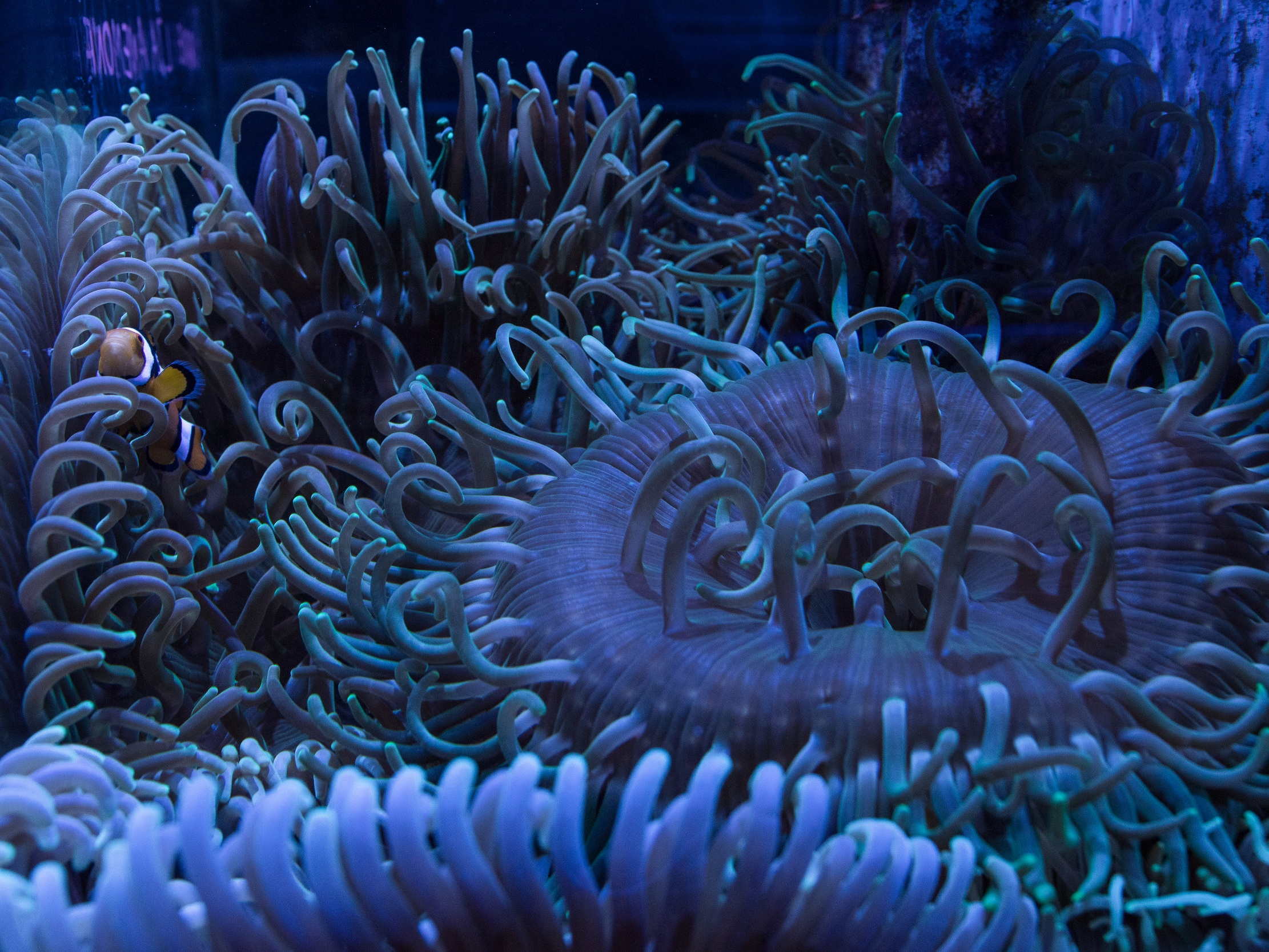 Coral reef futures pt 2: is there hope? -