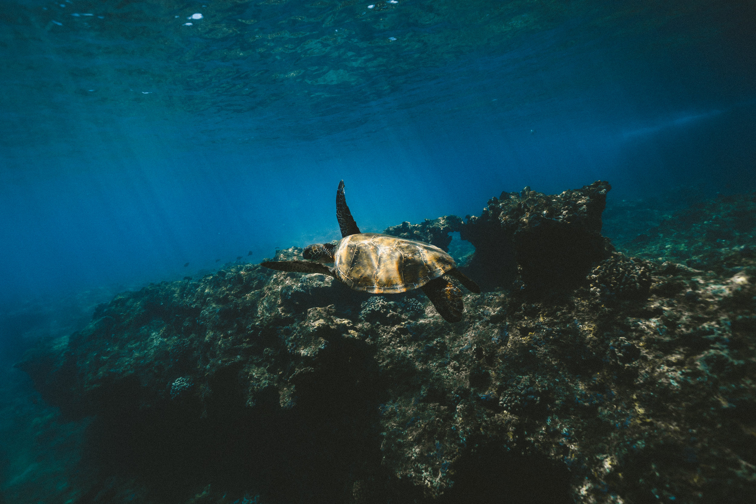 Conference call - Reef Futures 2018: Lessons learned at a coral restoration and intervention-science symposium