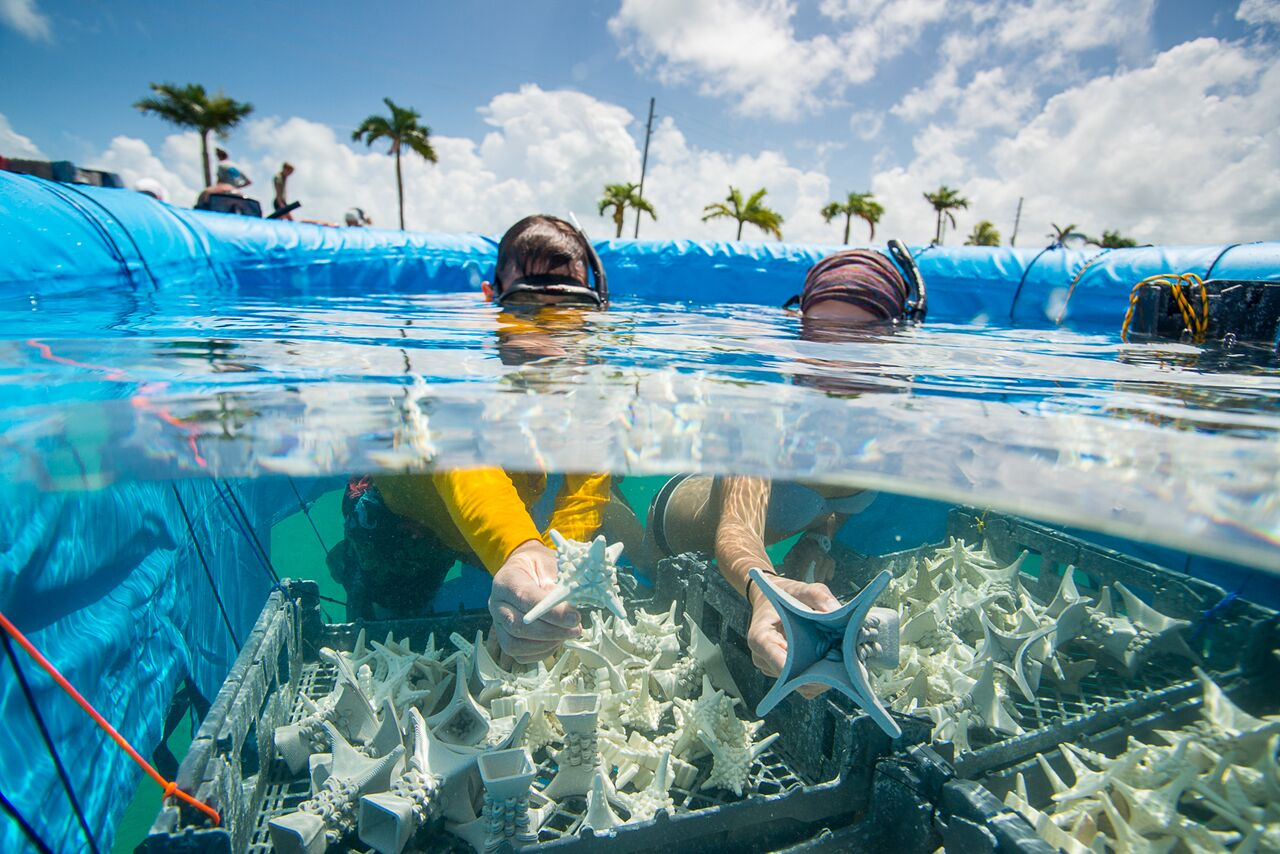 Coral researchers hold pre-conditioned, 3D-printed substrates (designed by SECORE International) upon which coral larvae will settle. Photo: Paul Selvaggio