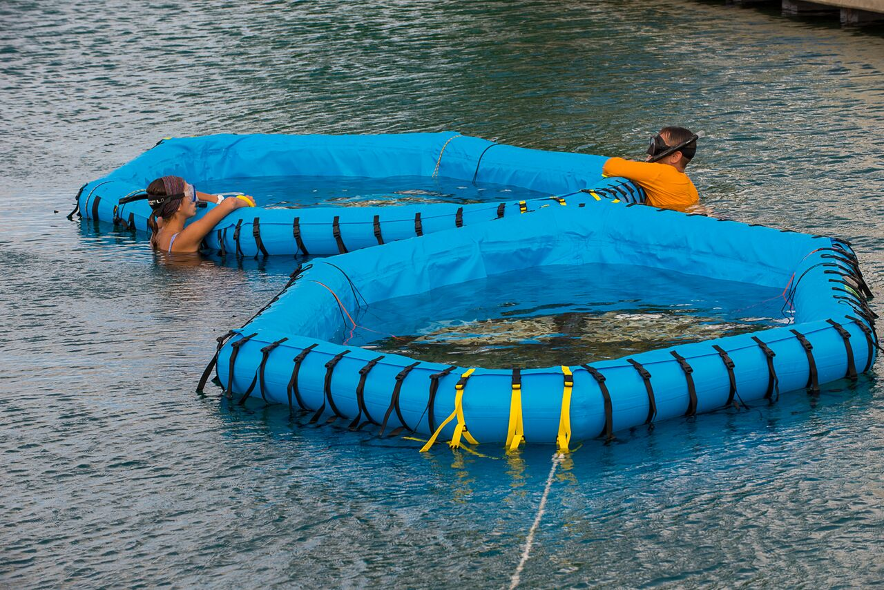 Coral researchers in the Bahamas setting up the in-water pools (designed by SECORE International) that will soon host swimming coral larvae. Photo: Paul Selvaggio