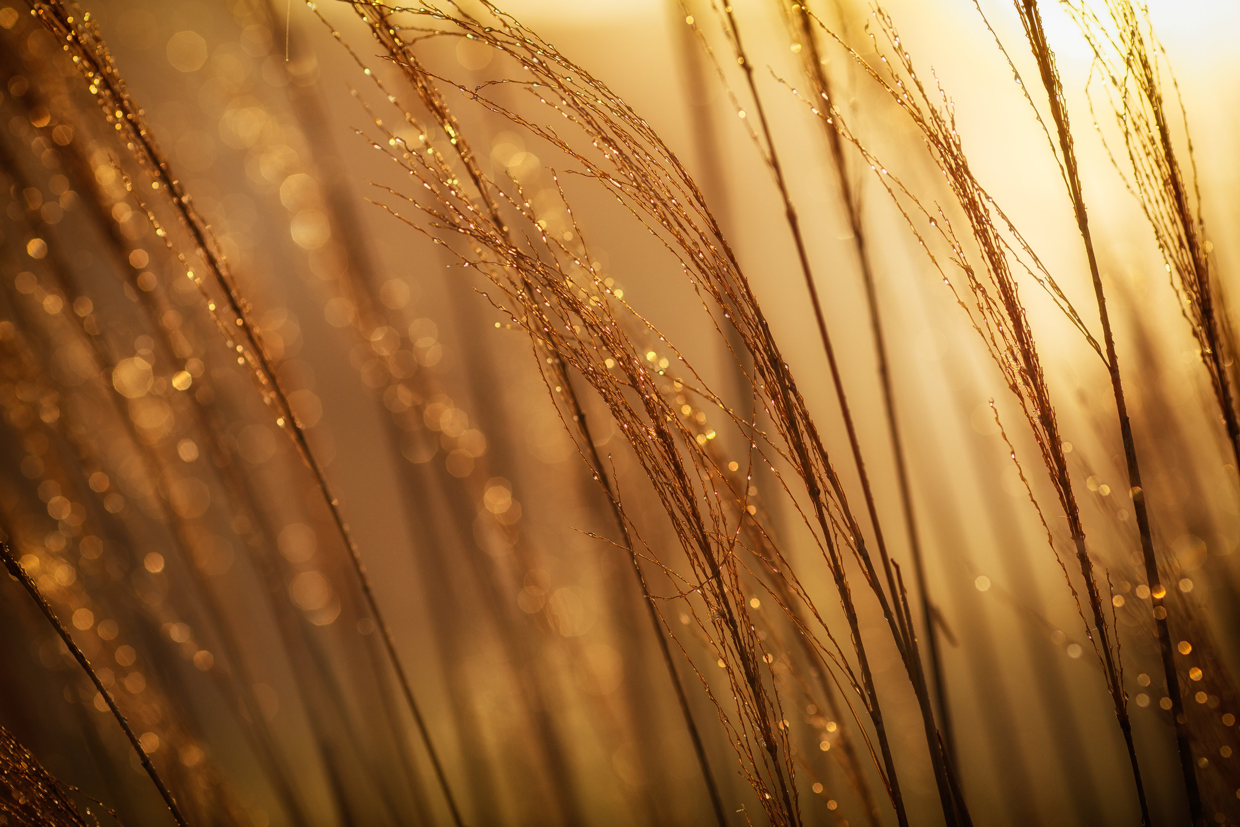 Low-gluten wheat engineered using CRISPR could preserve the taste and texture of wheat products while making them available to gluten-sensitive people. Photo credit: Johnny McClung