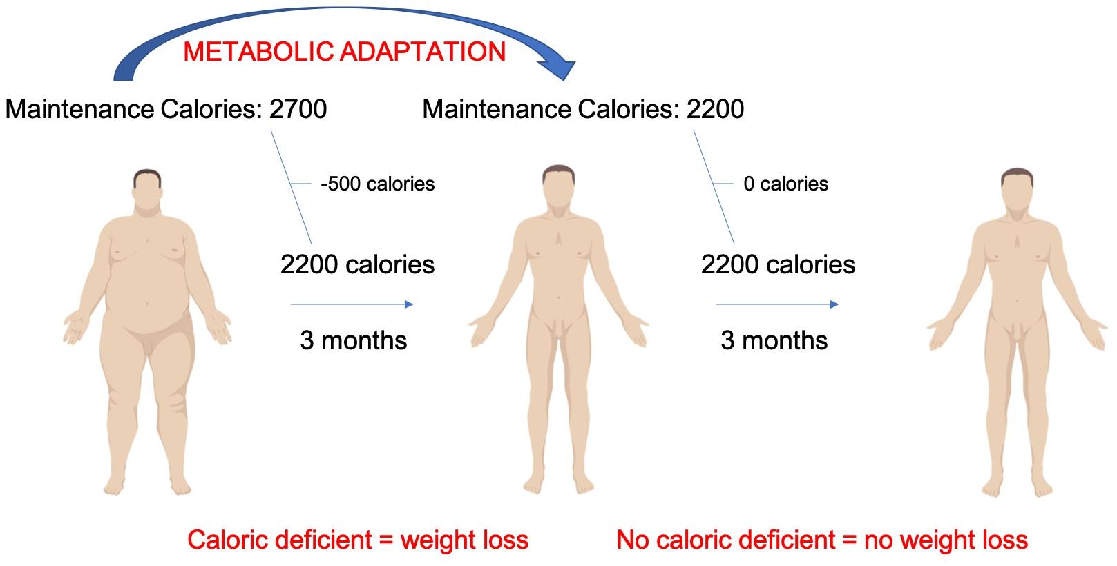 Metabolic+Adaptation+2.jpg