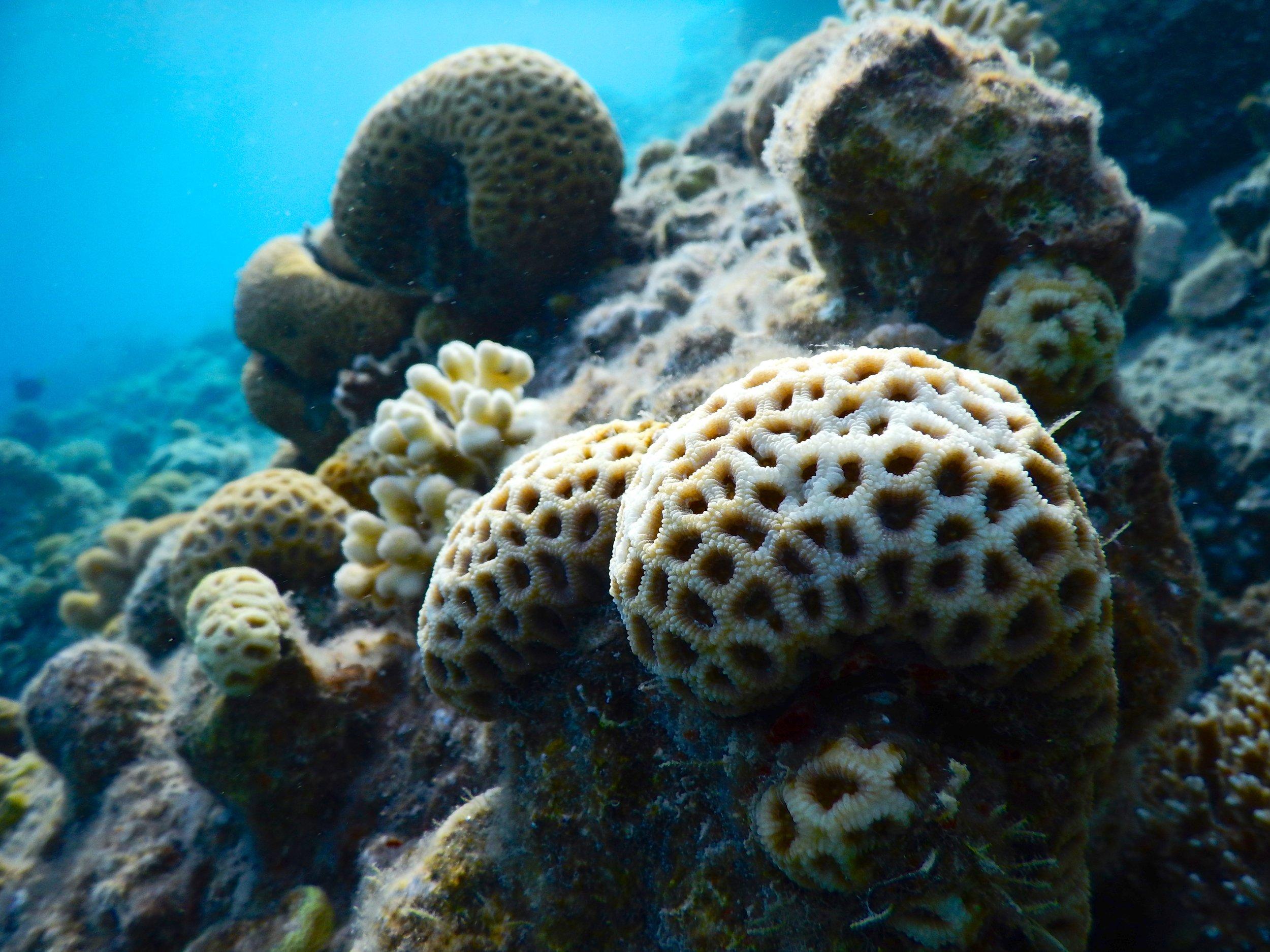 Coral reef futures pt 1 -