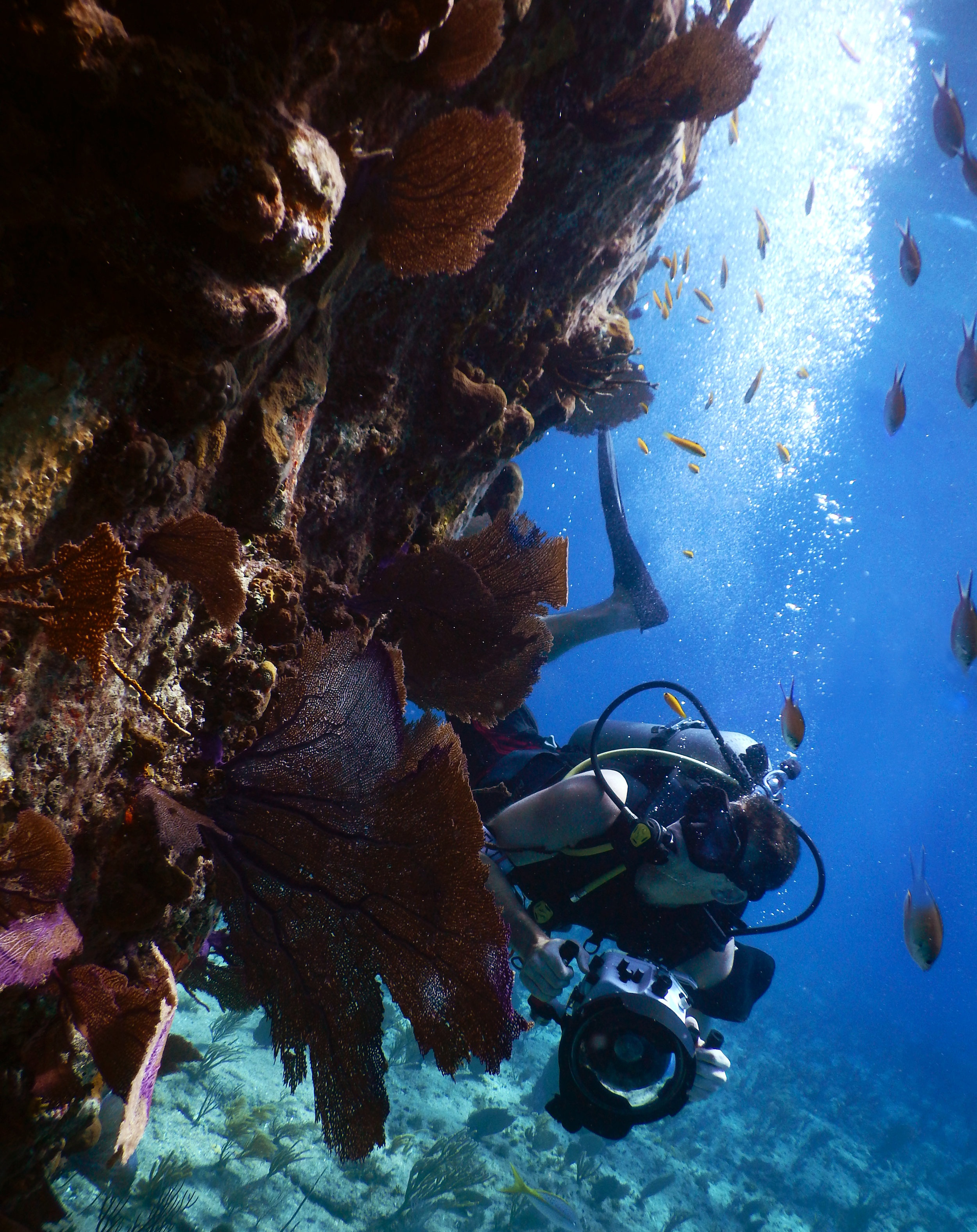 Photographer Josh Liberman checks out the marine life off the coast of Nassau.