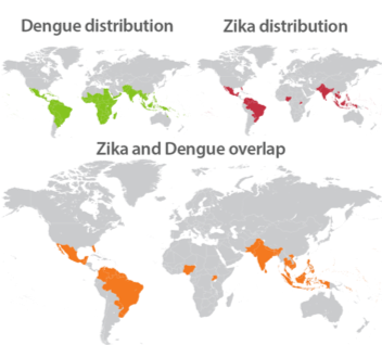 World map showing specific and overlapping distribution patterns of Zika and another similar flavivirus, Dengue. Credit: Medical Press