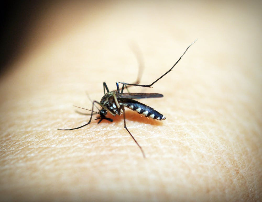 If we can interfere with the ability of mosquitos to infect us with pathogens, we can stop these diseases at their source. Photo credit: IconO.com
