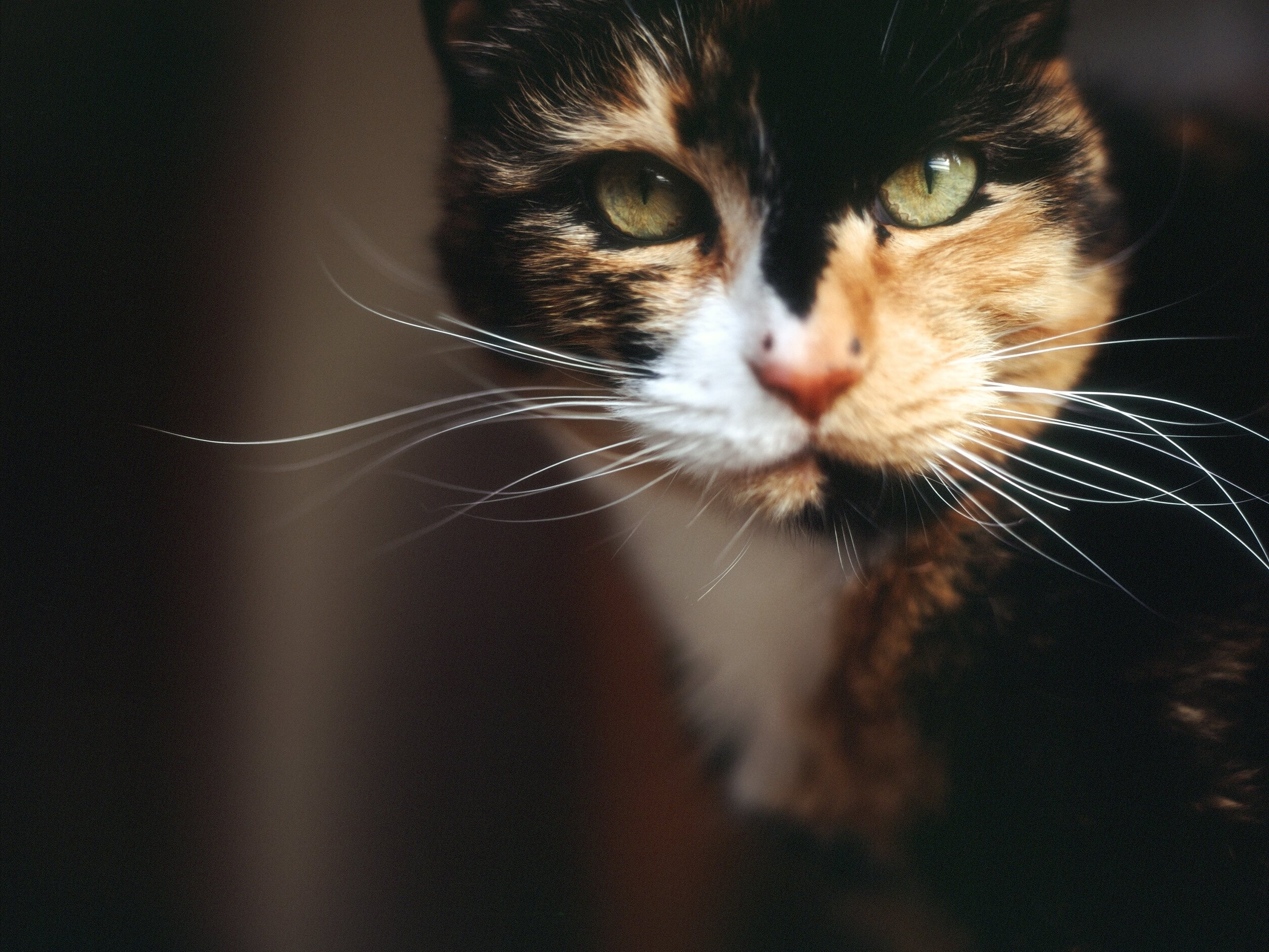 THE BASICS OF GENETICS: HOW WOMEN AND CALICO CATS ARE SIMILAR -